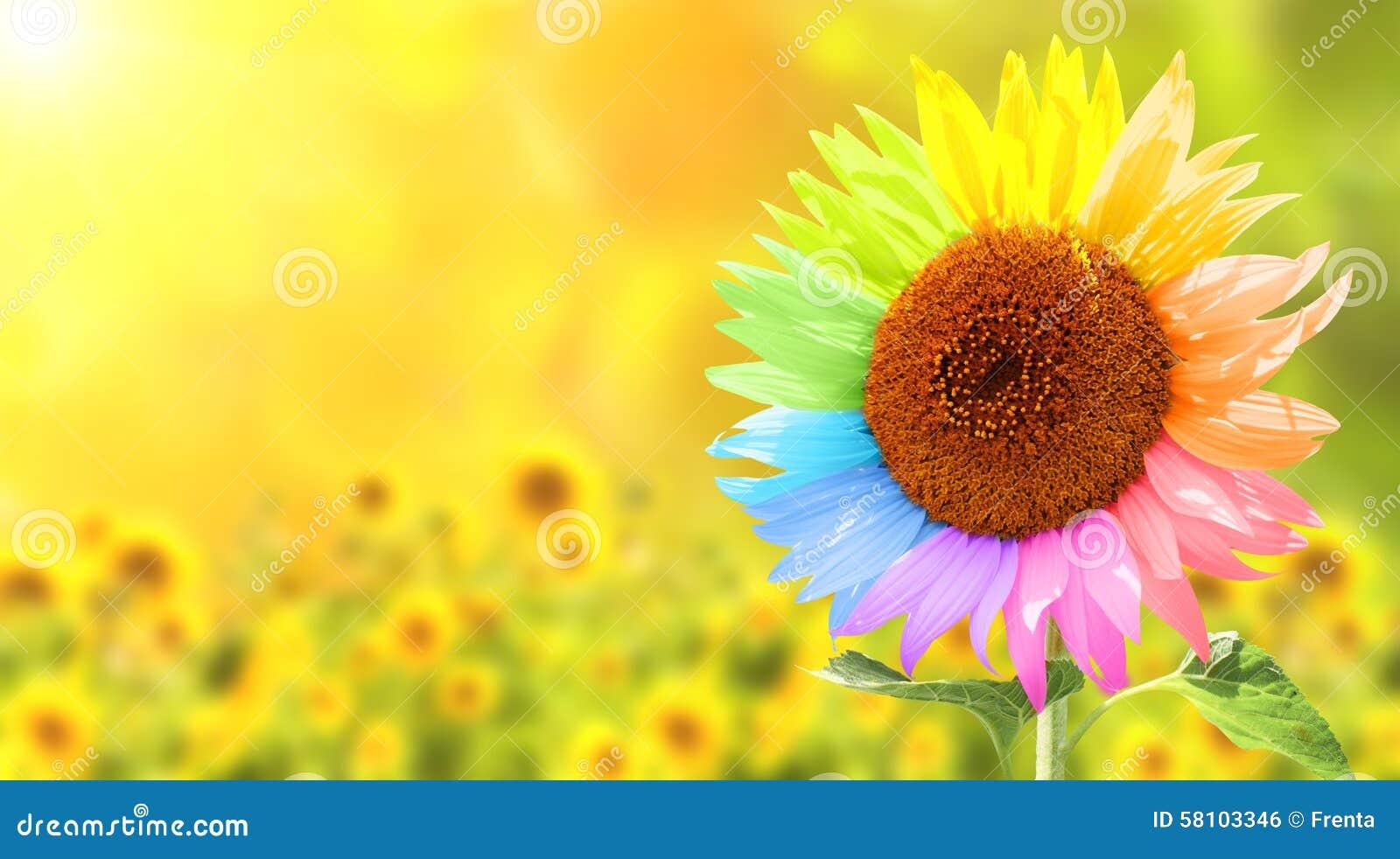Sonnenblume Gemalt In Den Verschiedenen Farben Stockfoto - Bild von ...