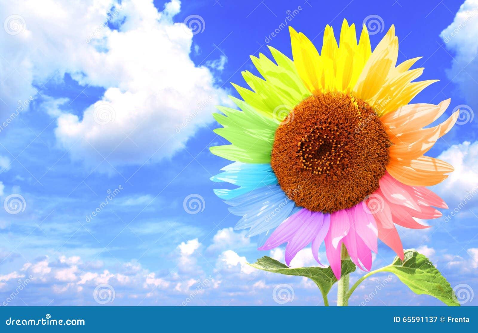 Sonnenblume Mit Den Blumenblättern, Gemalt In Den Verschiedenen ...