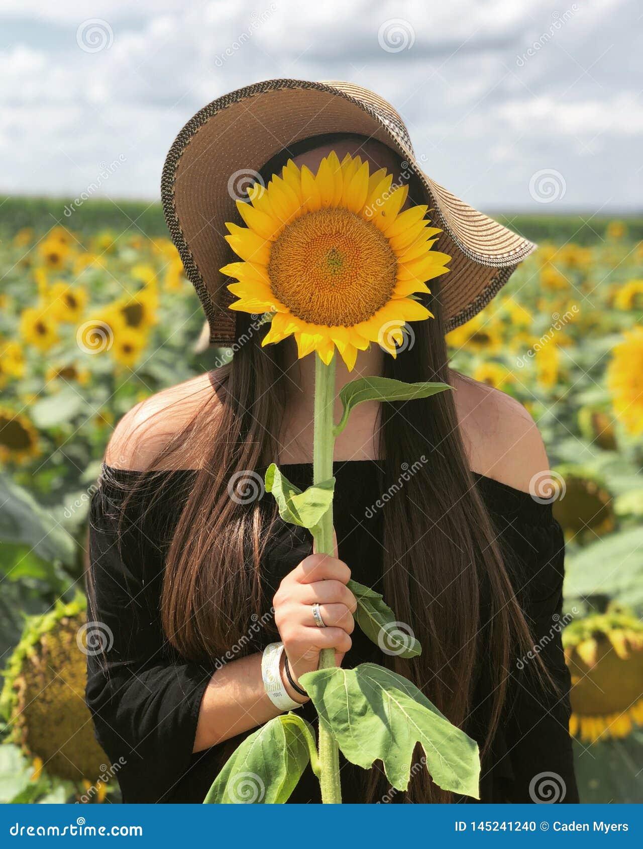Sonnenblume Sonntag
