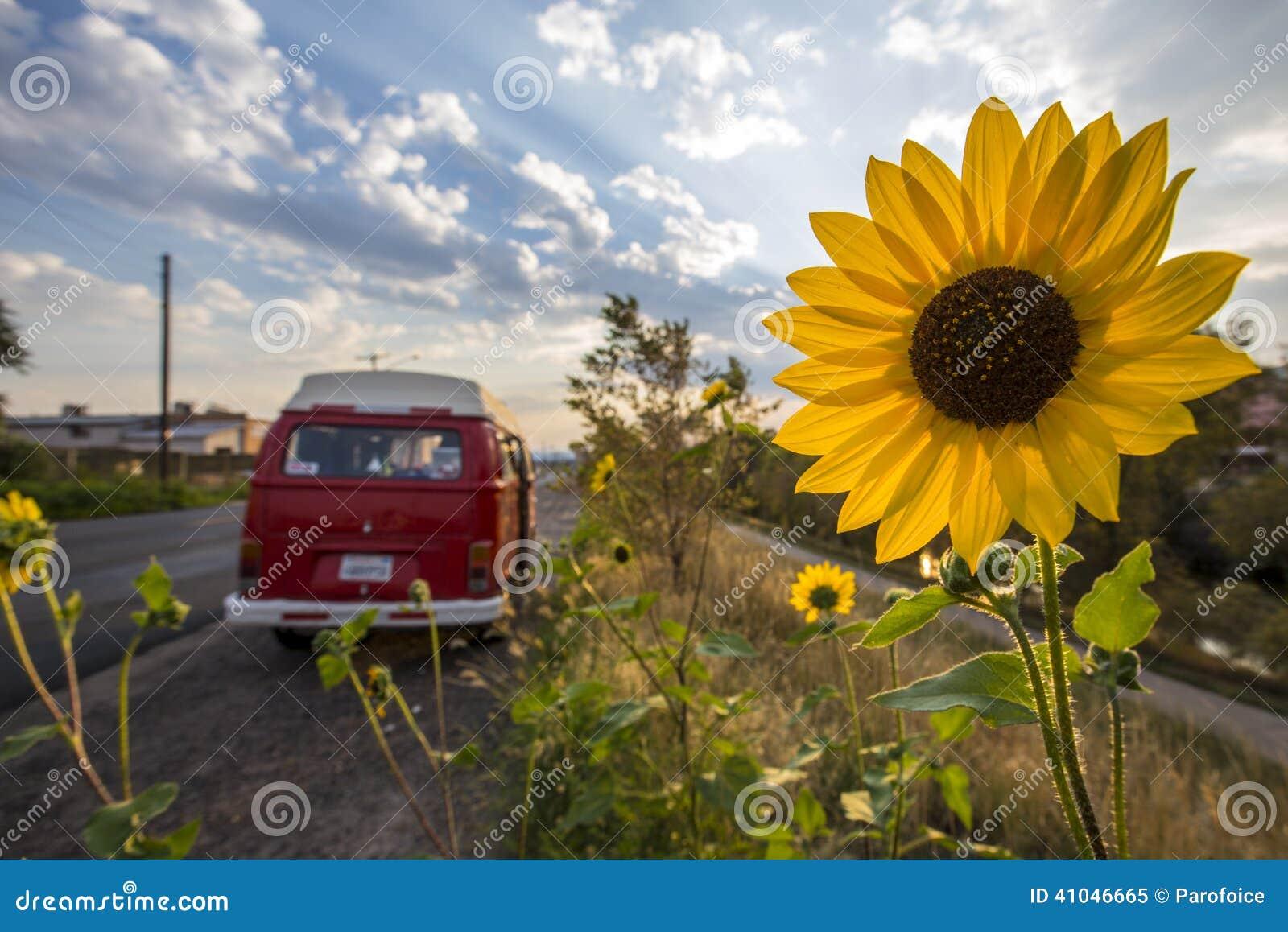 Sonnenblume und VW-Bus