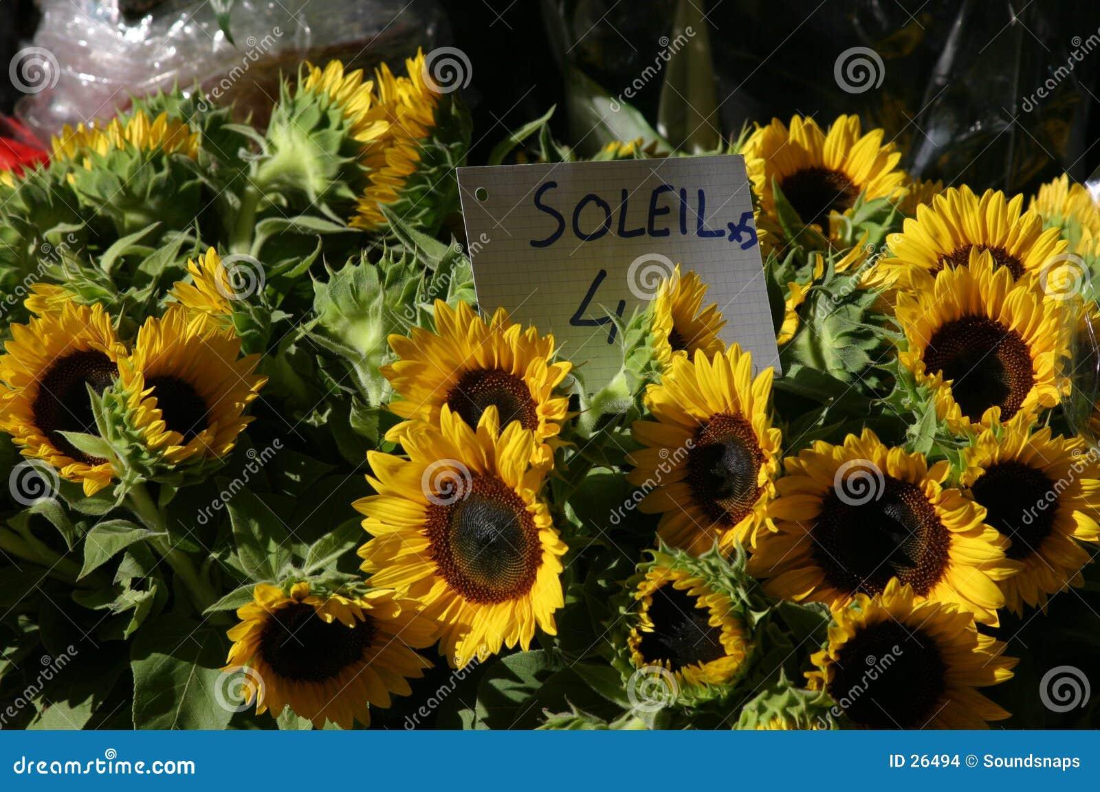 Sonnenblumen im Markt