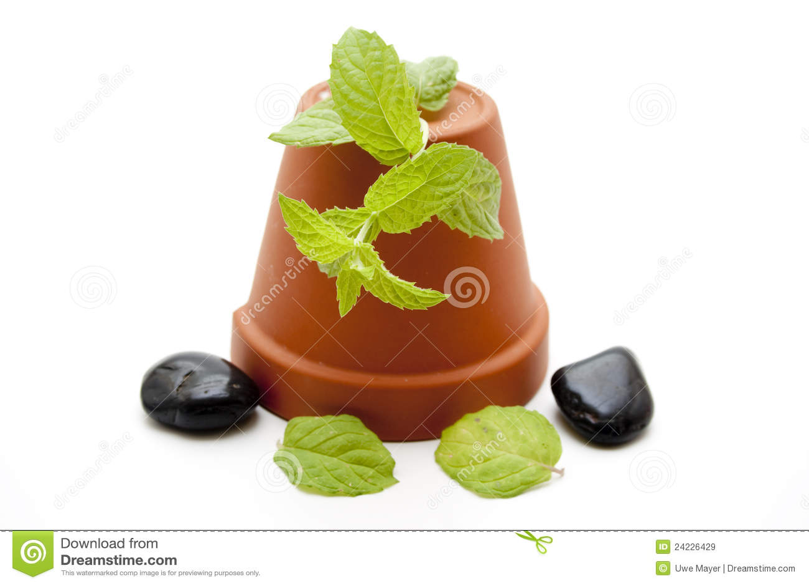 sonnenblumen pflanzen im flowerpot lizenzfreie stockbilder bild 24226429. Black Bedroom Furniture Sets. Home Design Ideas