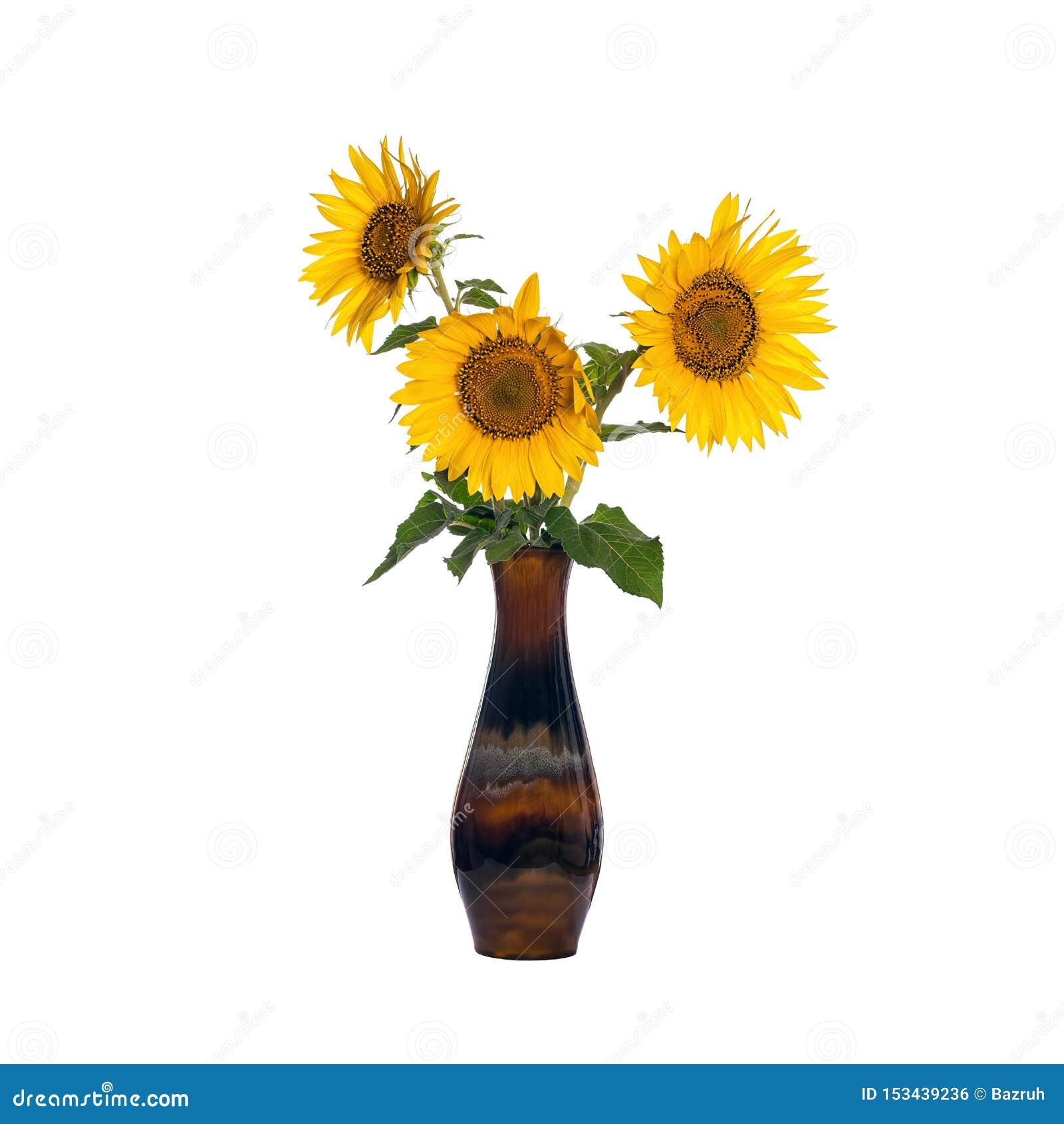 Sonnenblumenblumen in einem alten Porzellanvase lokalisiert auf Weiß