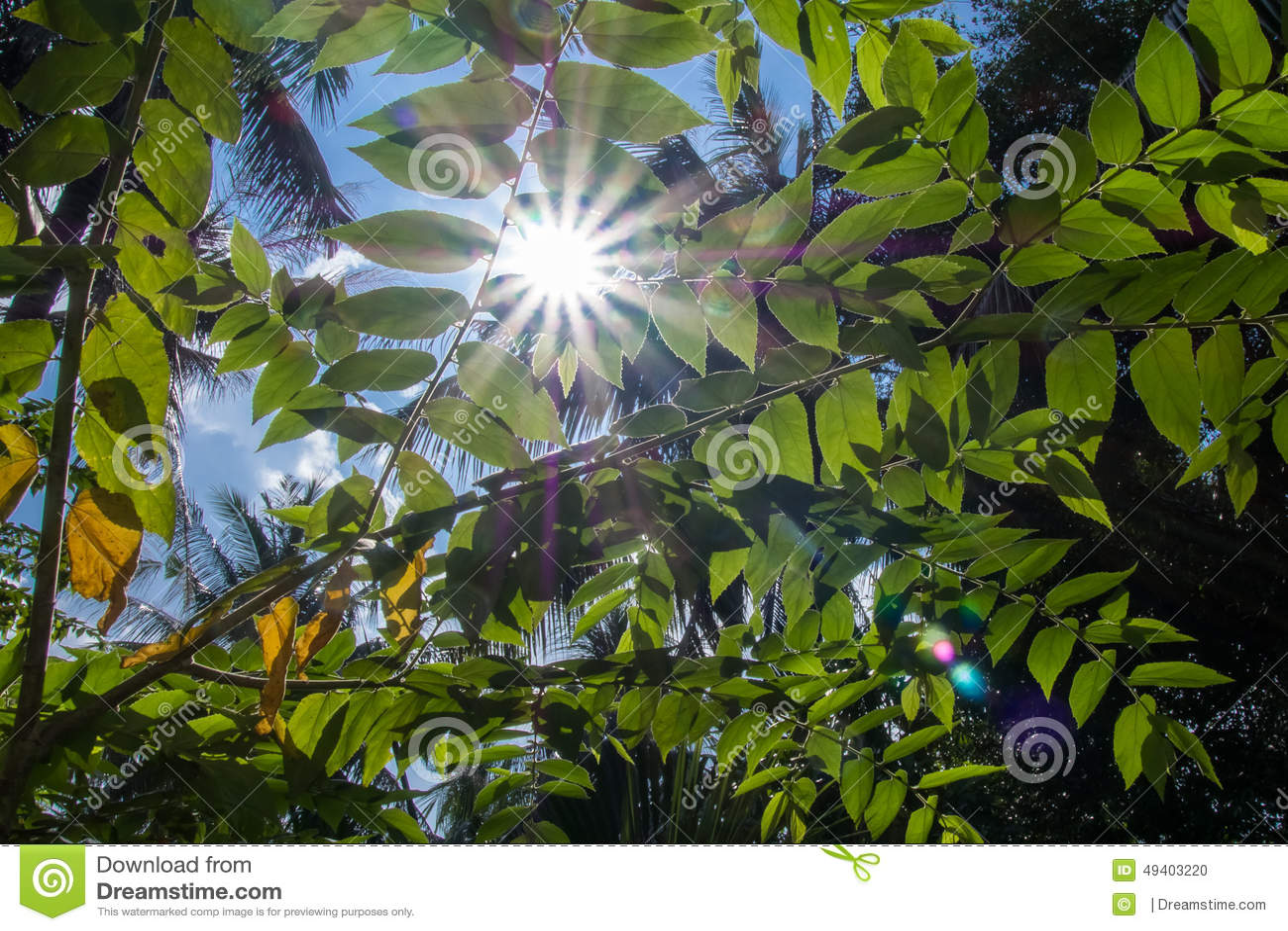 Download Sonnendurchbruch stockfoto. Bild von sonne, tropisch - 49403220