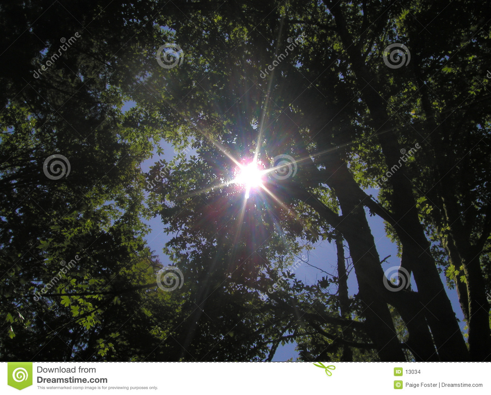 Sonnendurchbruch durch Bäume