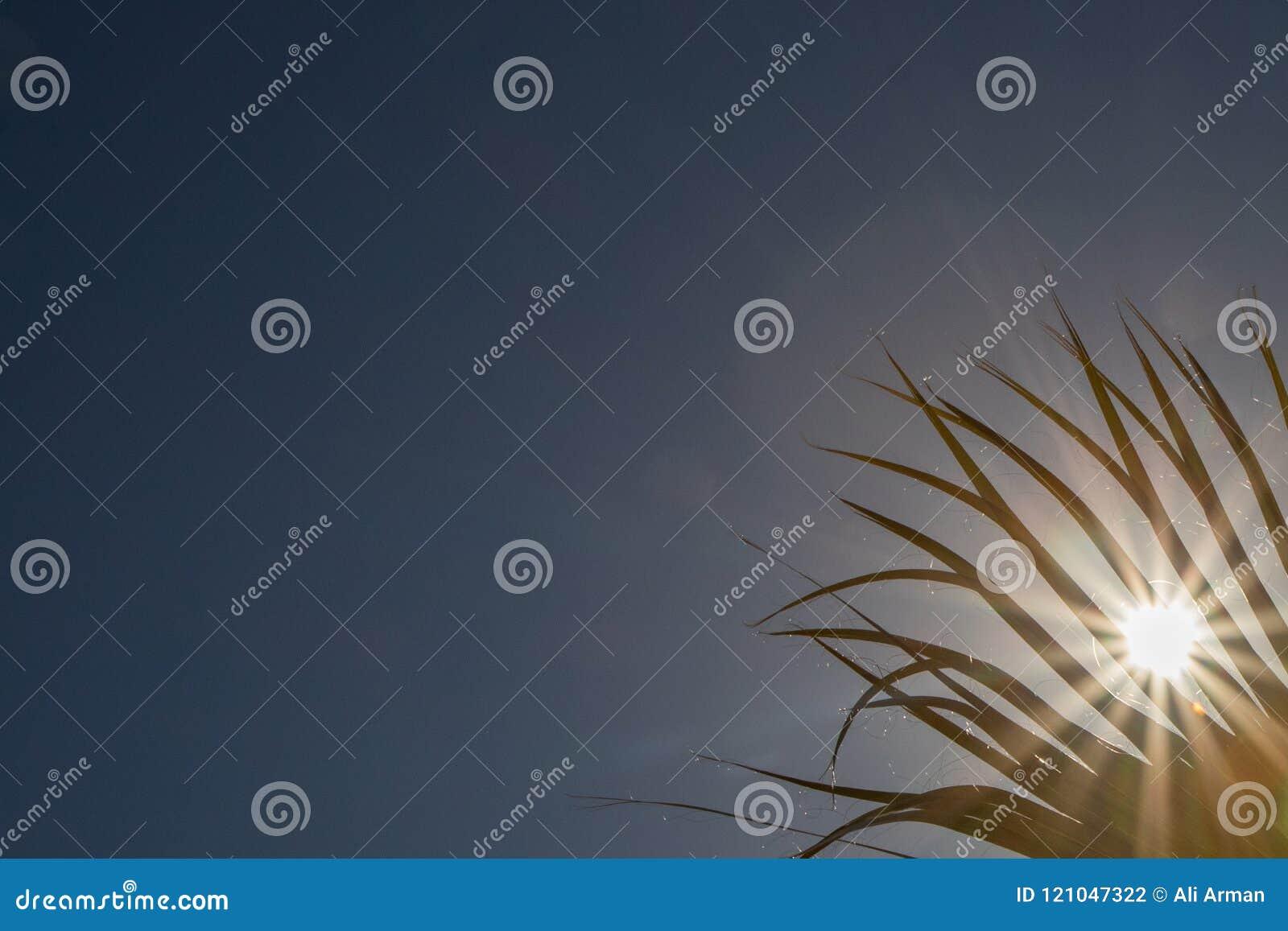 Sonnenlicht, das durch Palme blickt