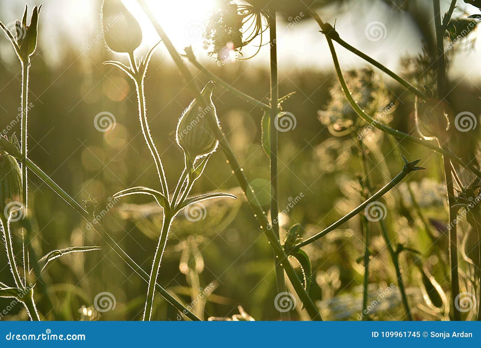 Sonnenlicht erhellt Wiesenanlagen, Garbe