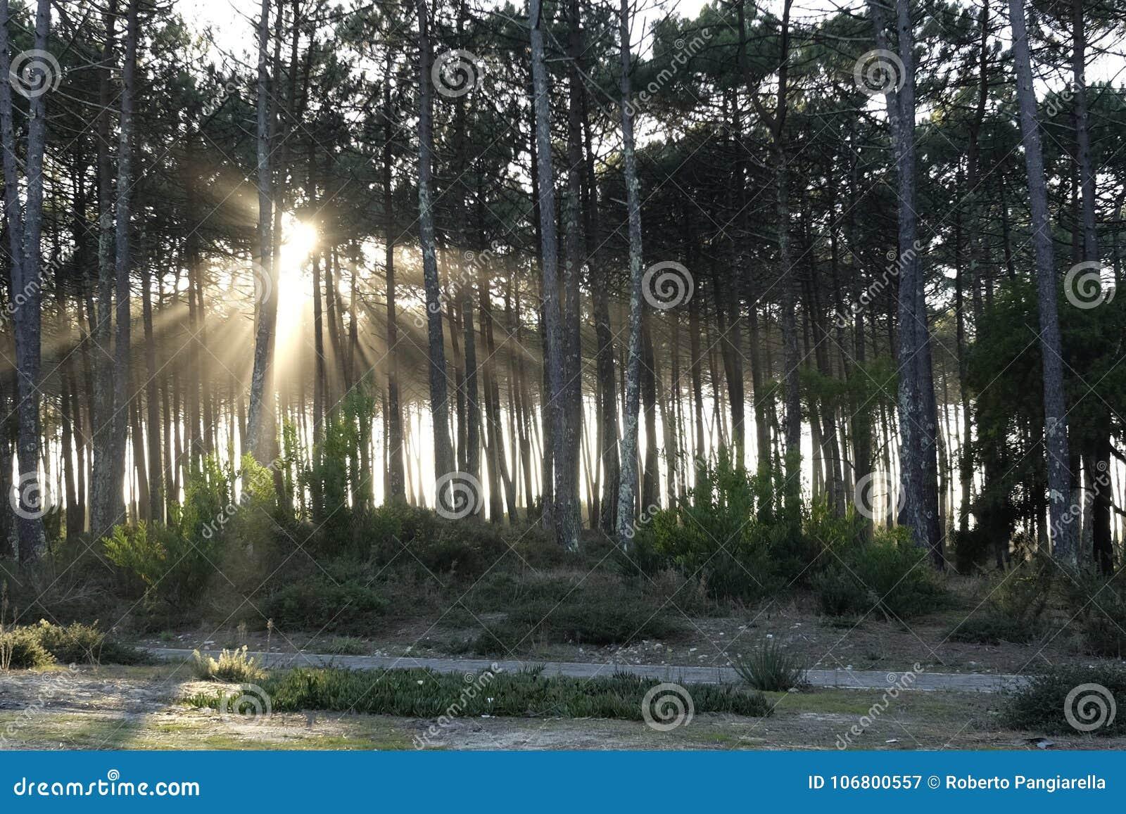 Download Sonnenstrahlen im Wald stockbild. Bild von wald, sunbeams - 106800557