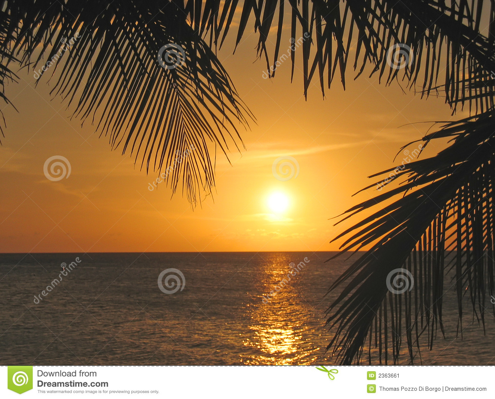 Sonnenuntergang durch die Palmen