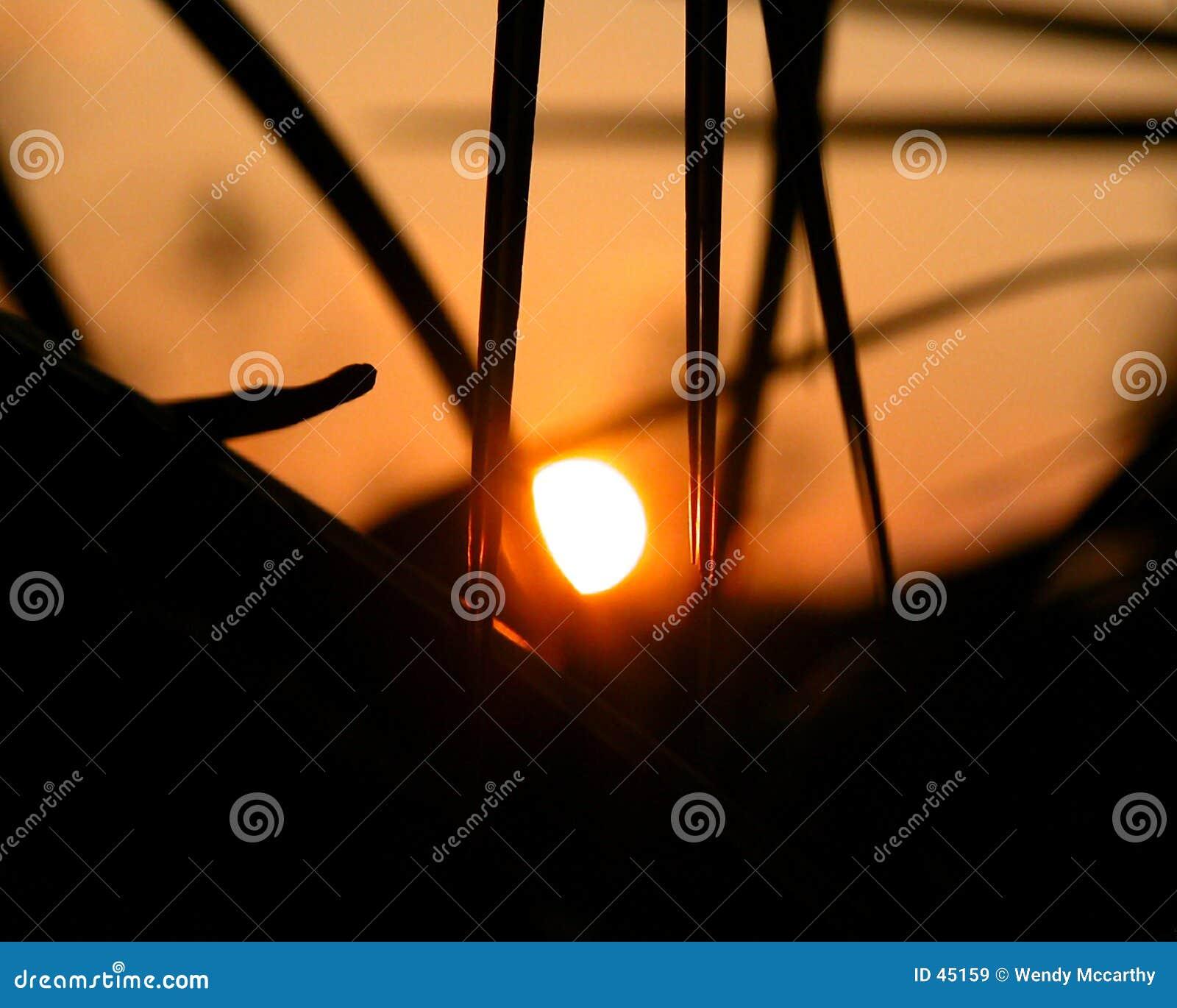 Sonnenuntergang durch eine Palme