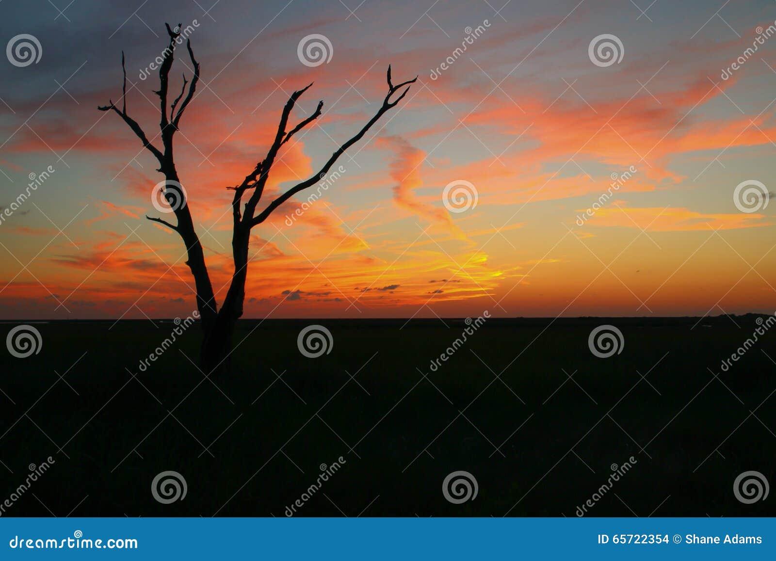 Sonnenuntergang im Louisiana-Sumpf