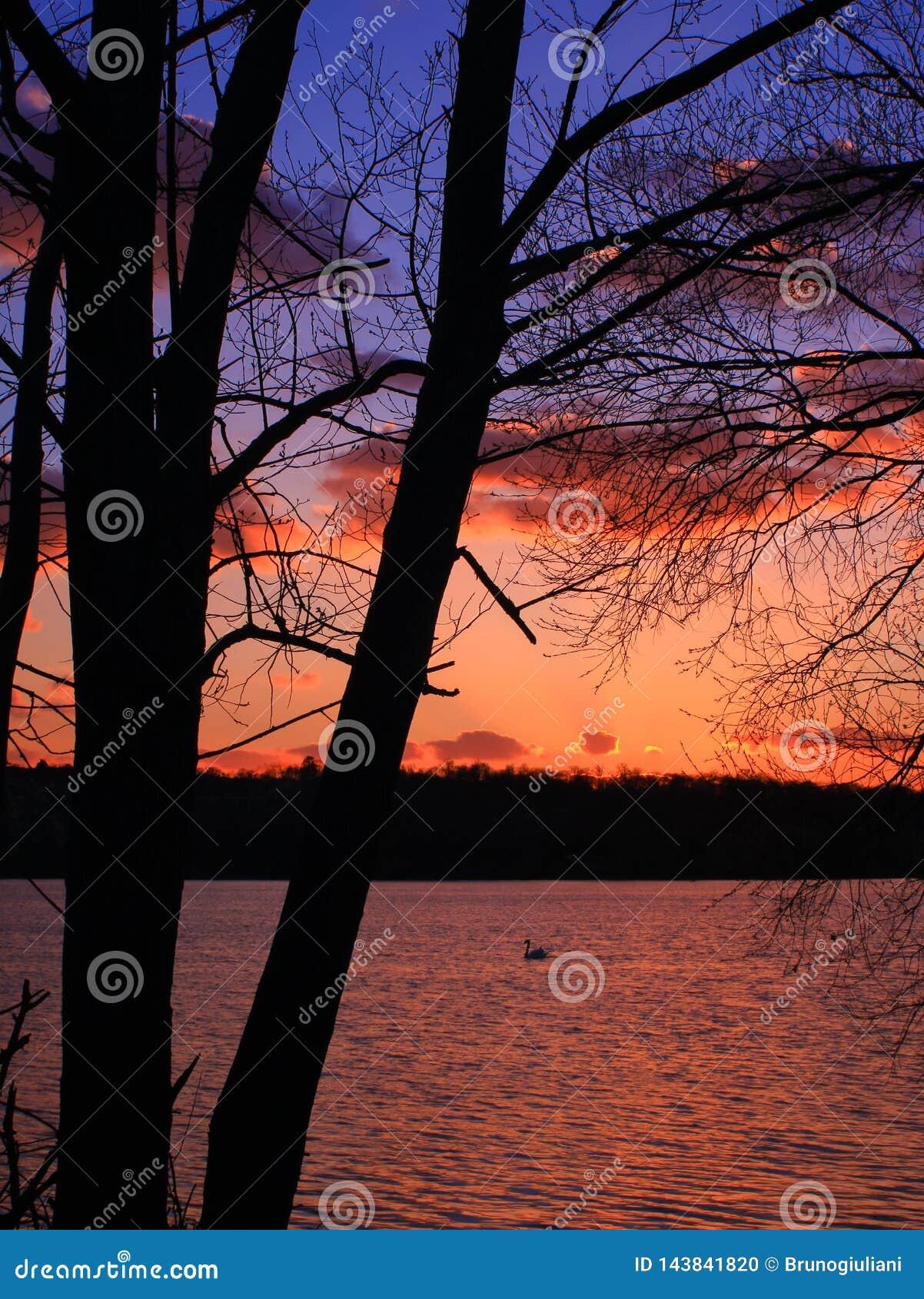 Sonnenuntergang mit dem Durchgang eines Schwans auf goldenen Reflexionen