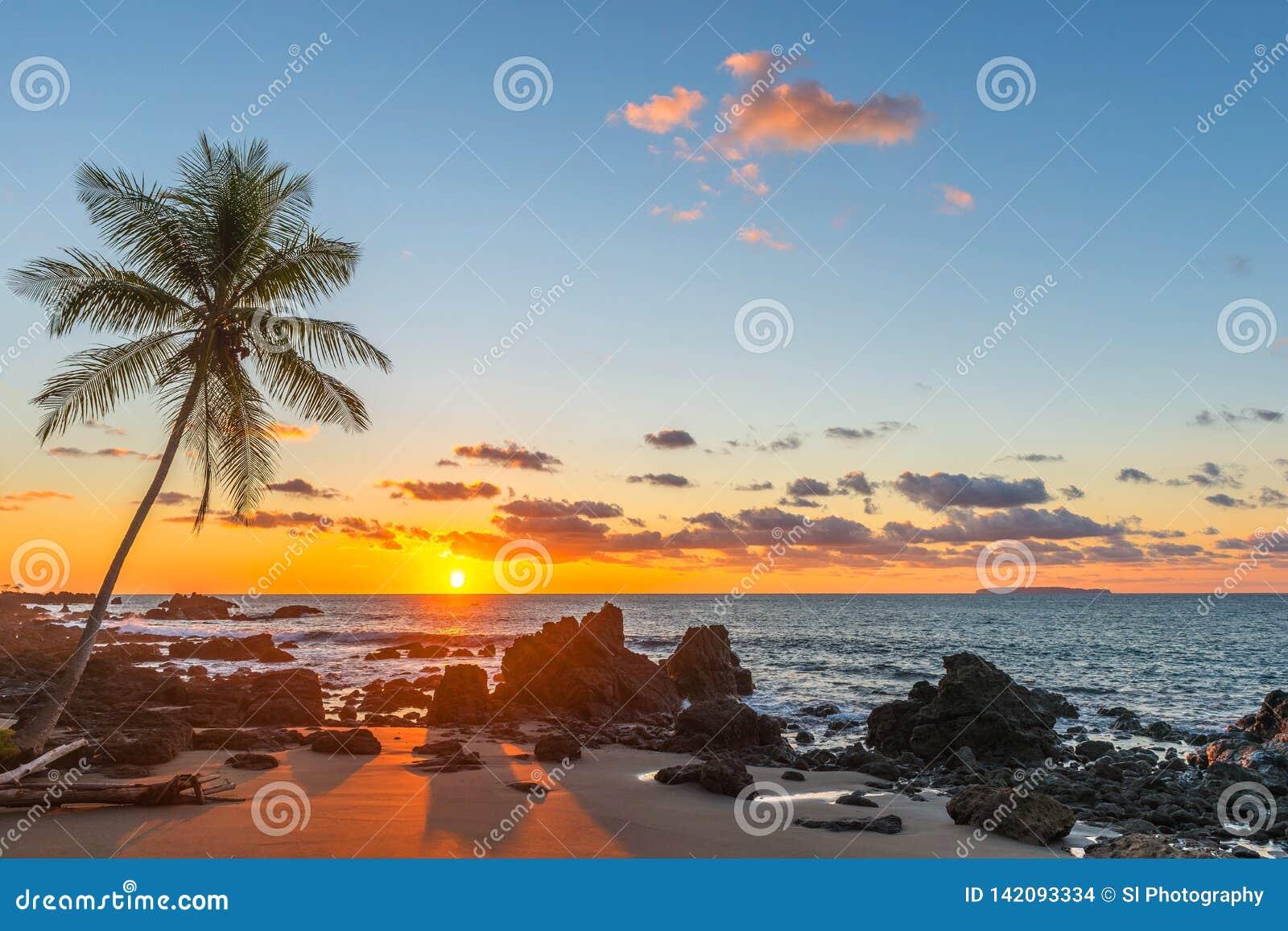 Sonnenuntergang mit Palme-Schattenbild, Costa Rica