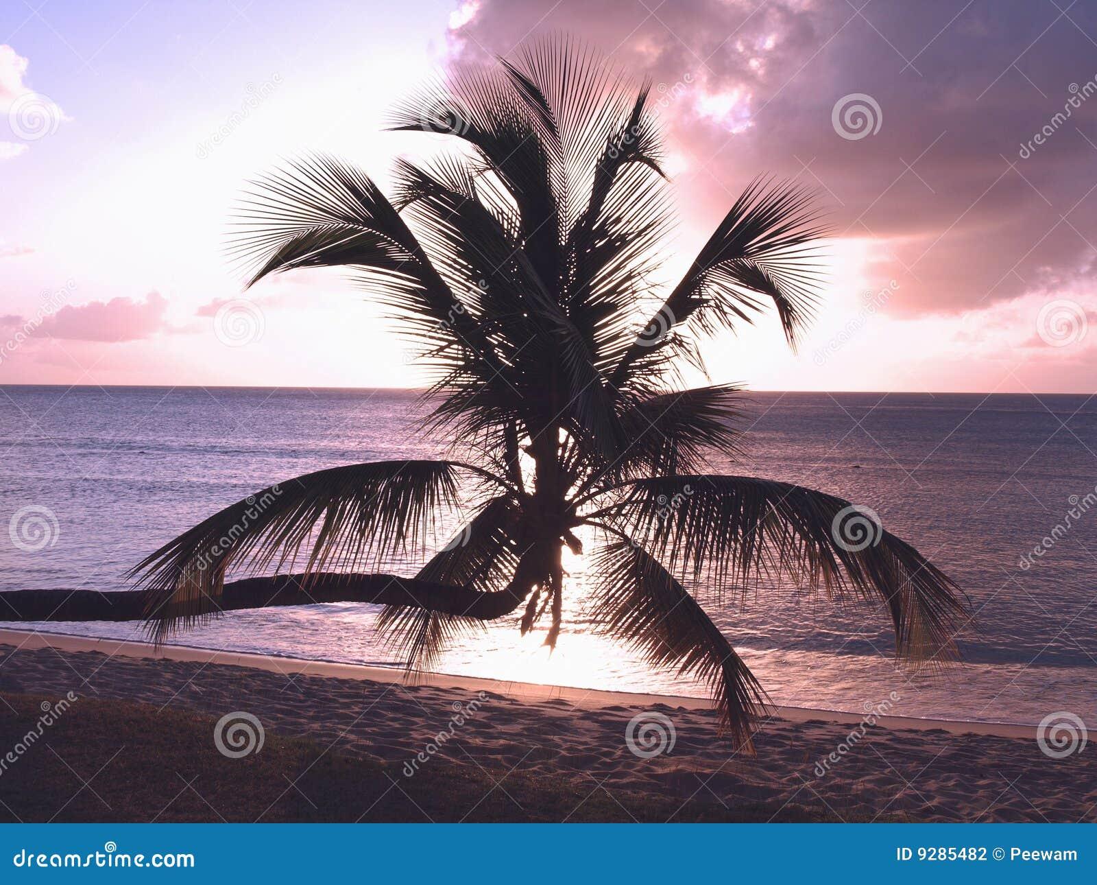 Sonnenuntergang-Palme