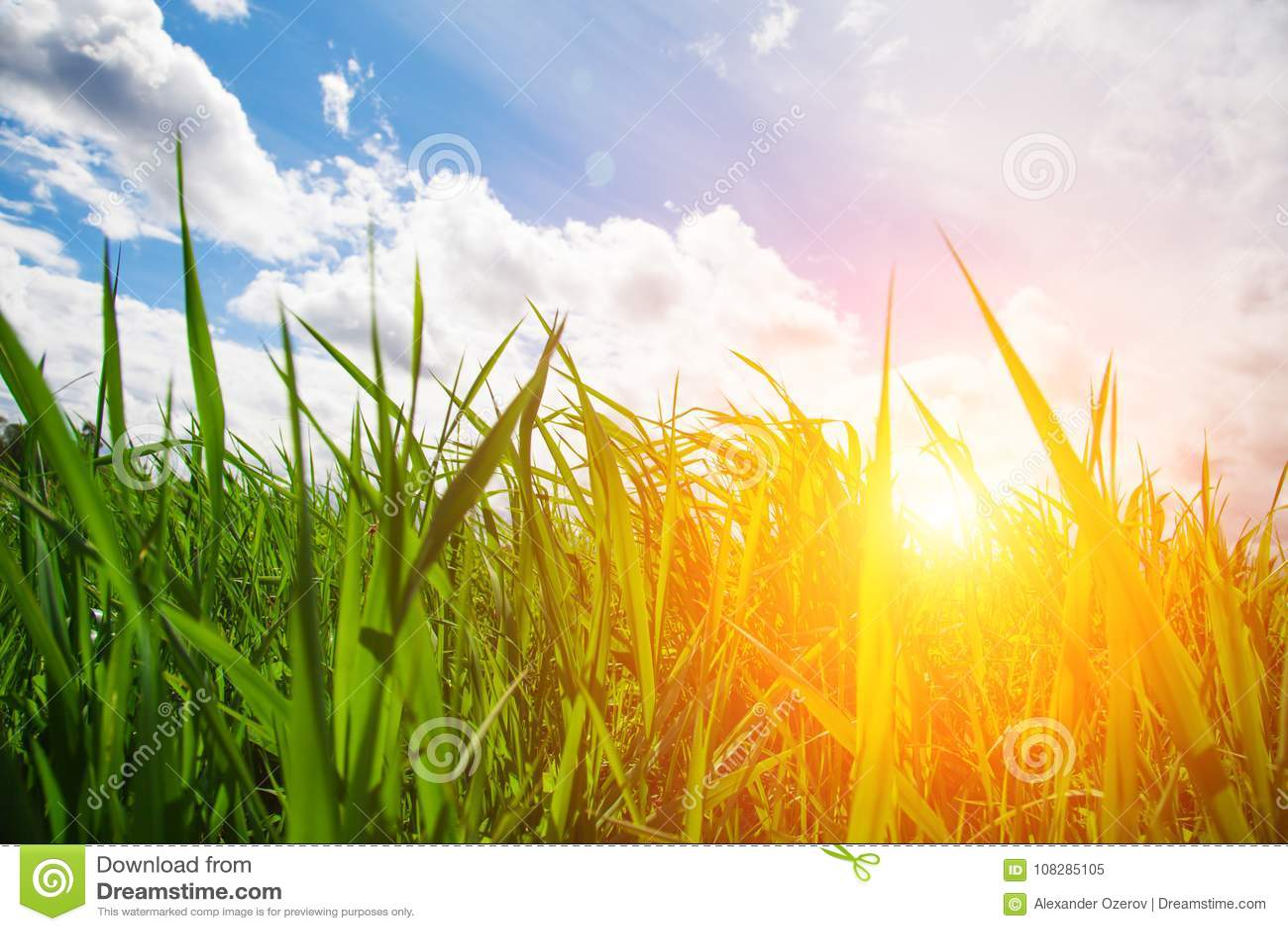 Sonnenuntergang und Gras