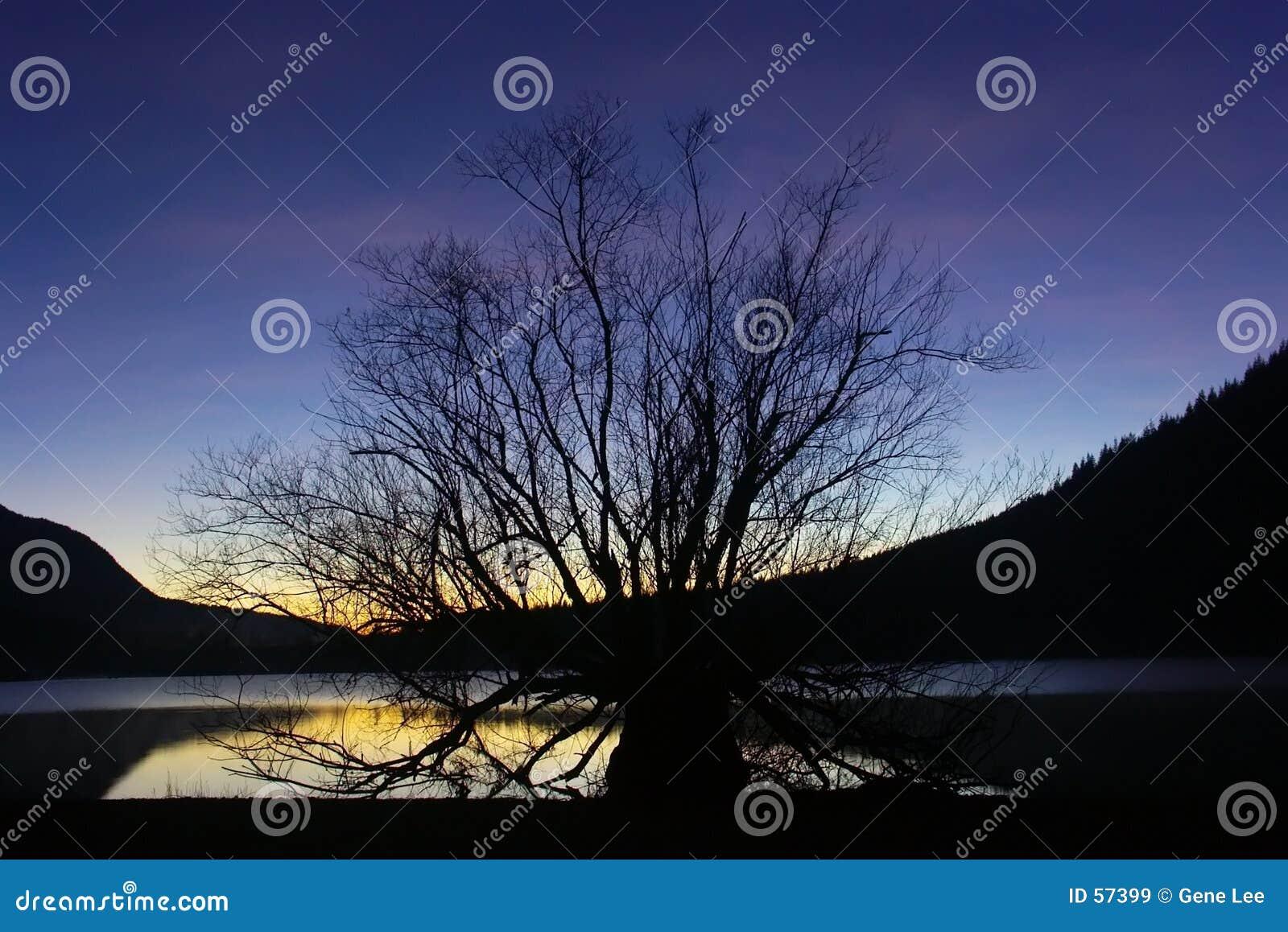 Sonnenuntergang-und Krankenpflege-Baum
