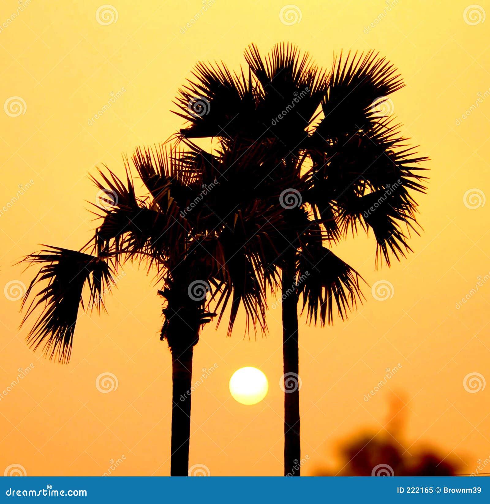 Sonnenuntergang zwischen Palmen