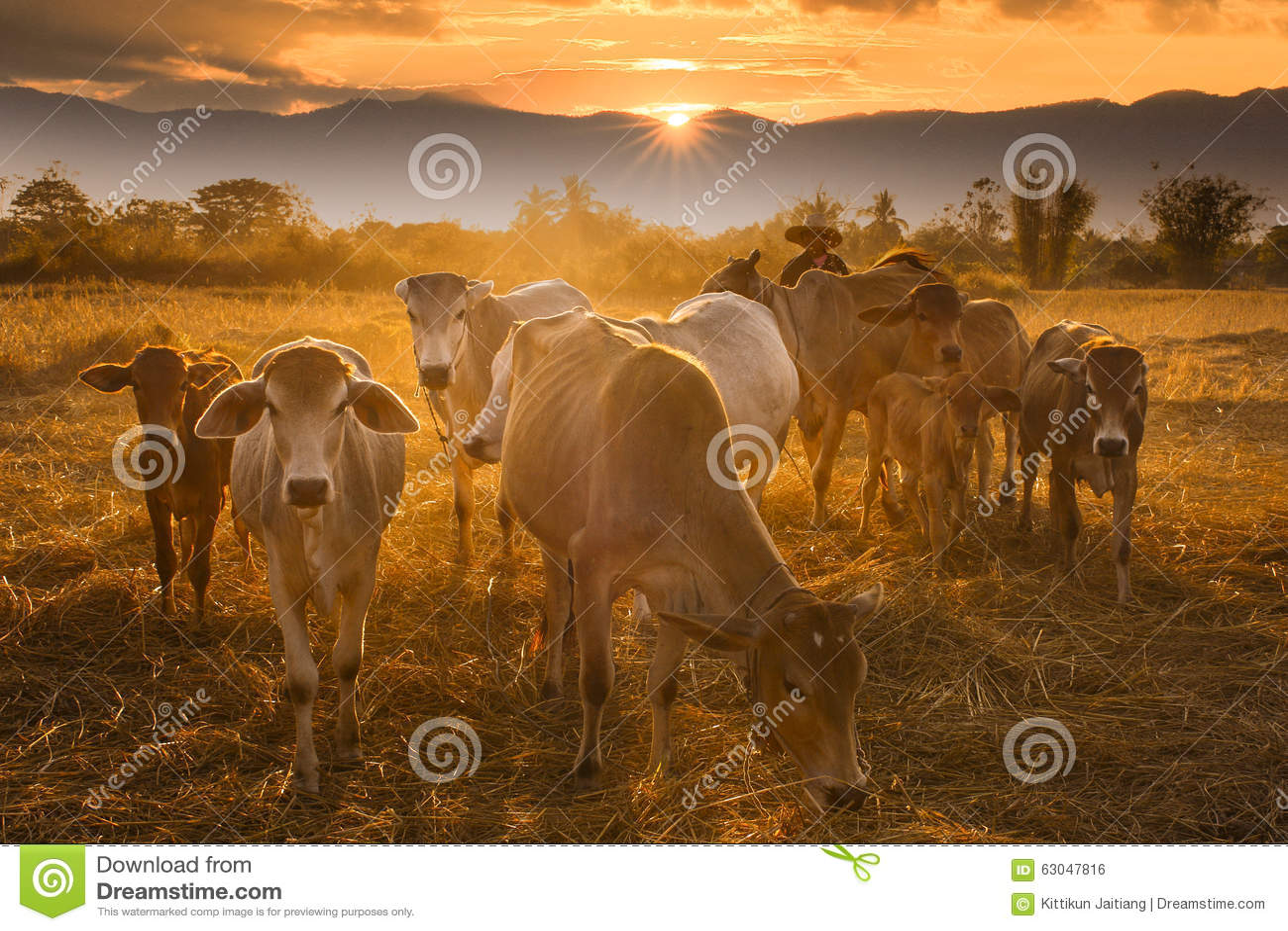 Sonnenuntergangcowboy