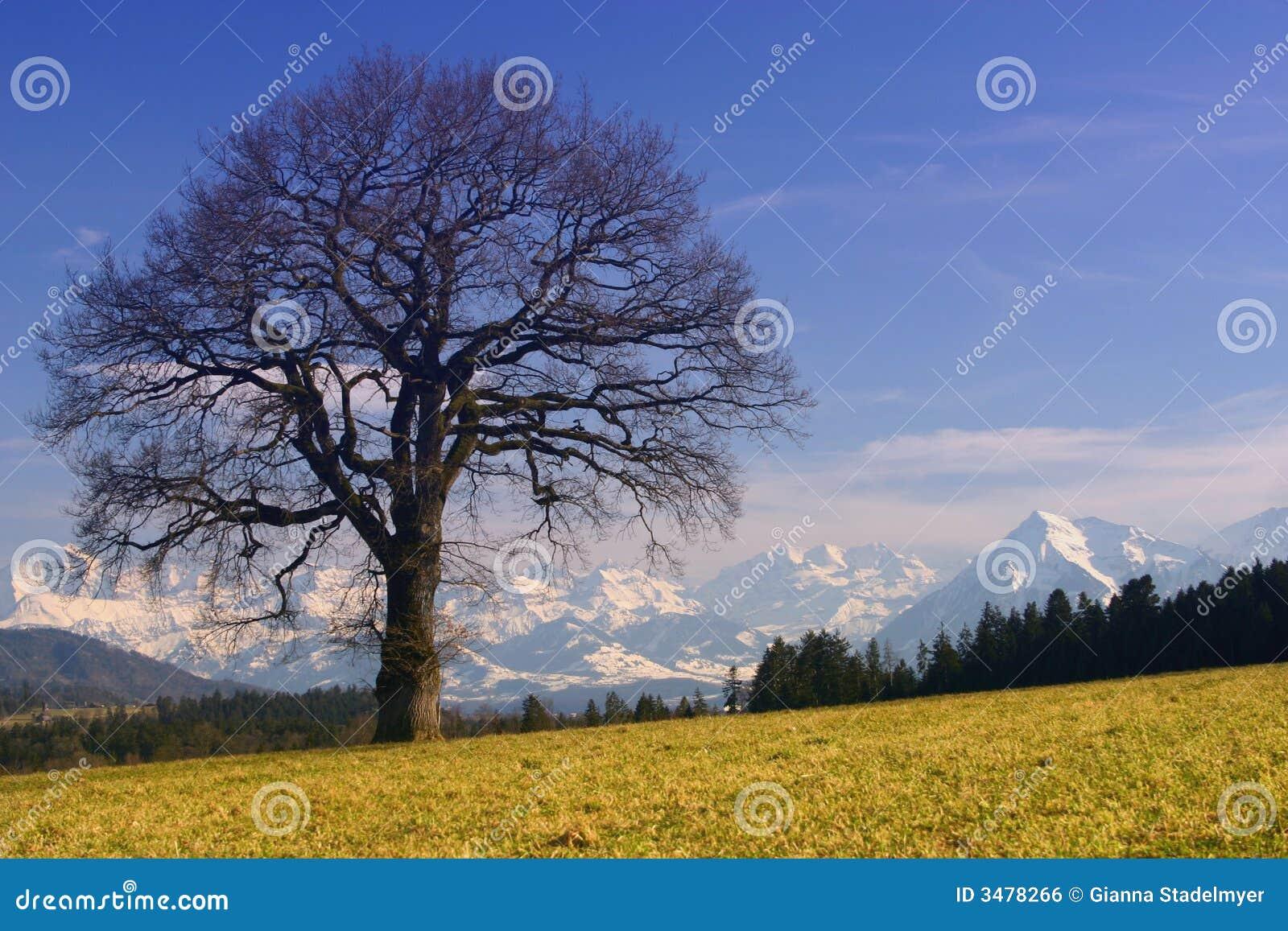 Sonnige Alpen