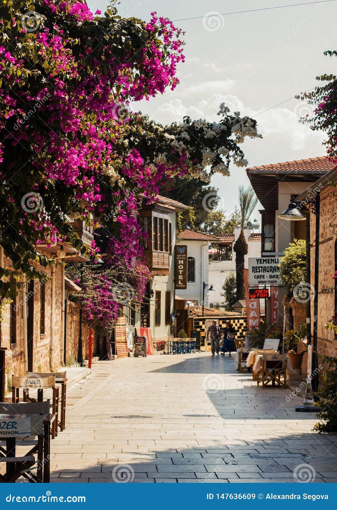 Sonnige gehende Straße mit blühenden purpurroten Blumen in historischer Mitte Antalyas - Kaleici, die Türkei