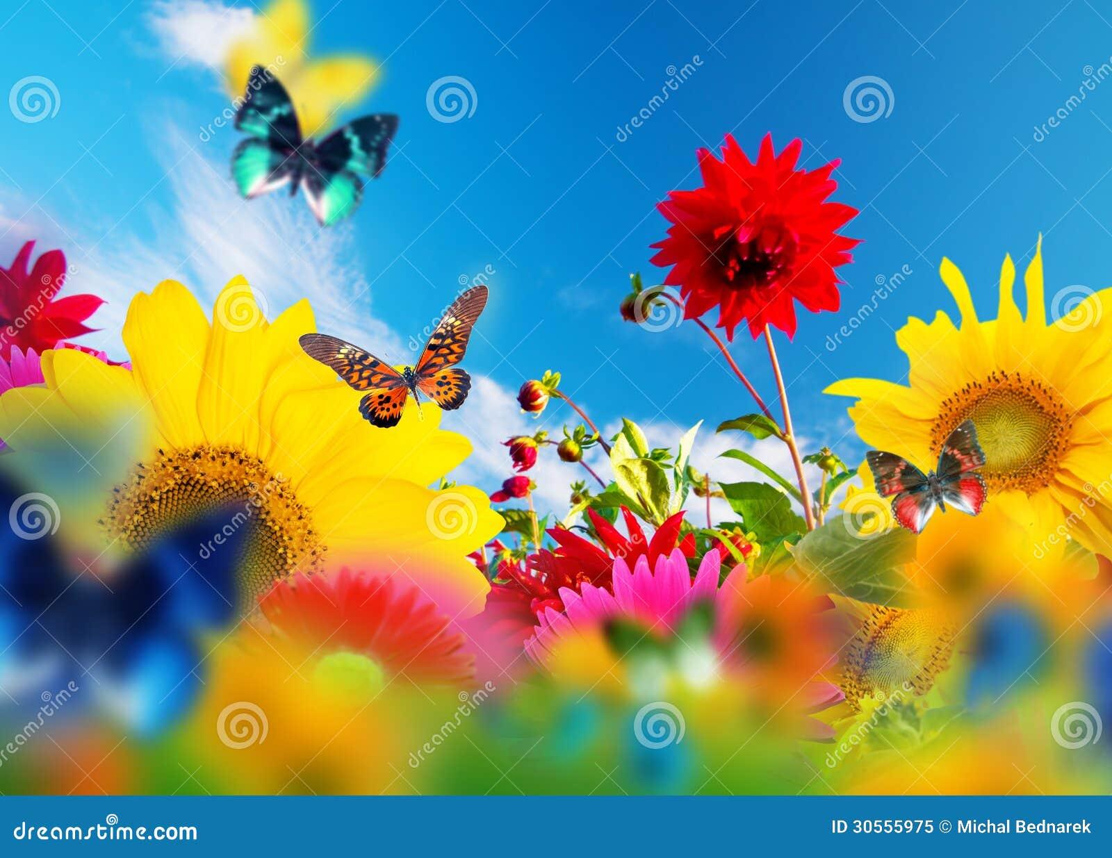 Sonniger Garten Von Blumen Und Von Schmetterlingen Stockbild Bild