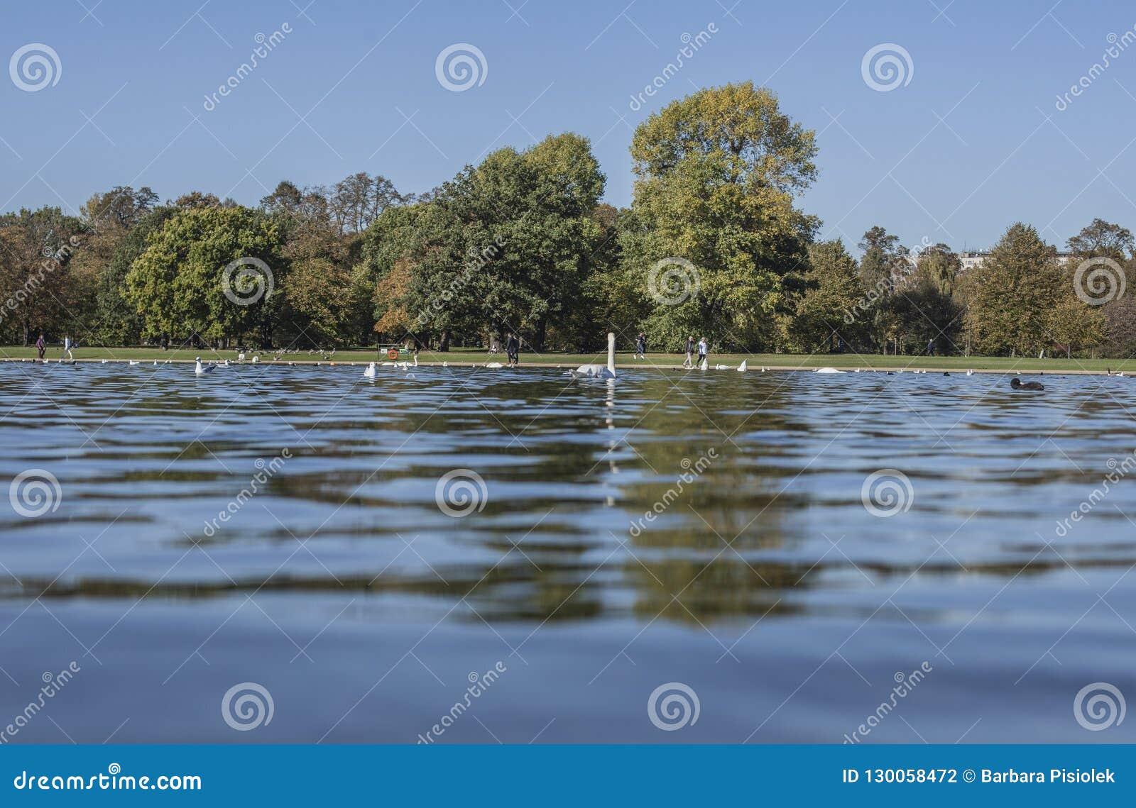 Sonniger Herbst in Hyde Park - blaues Wasser von einem Teich, von Bäumen und von Vögeln