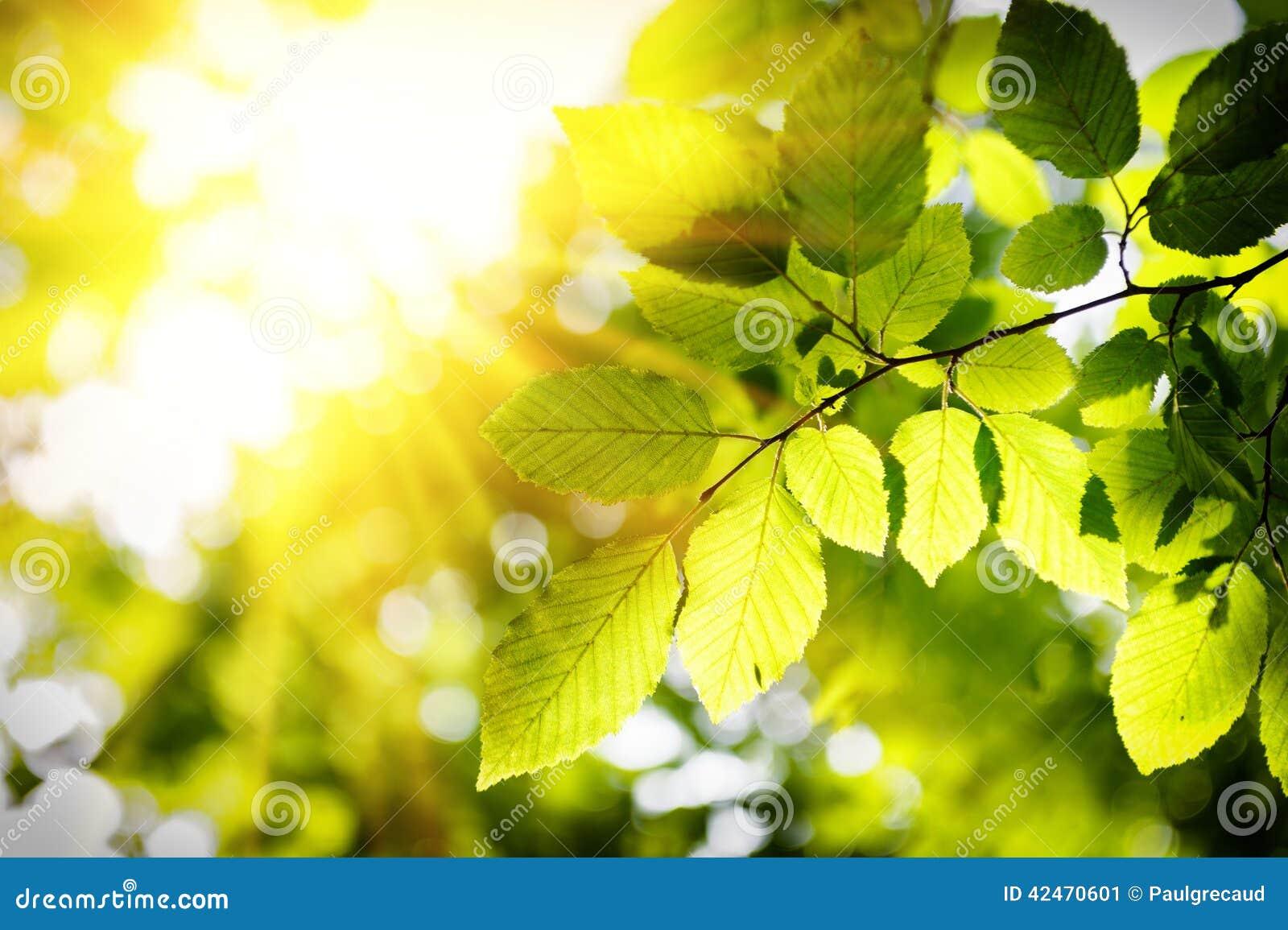 Sonniger Hintergrund mit grünen Blättern