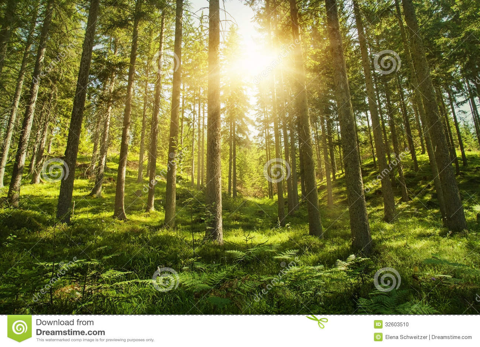 Sonniger Wald