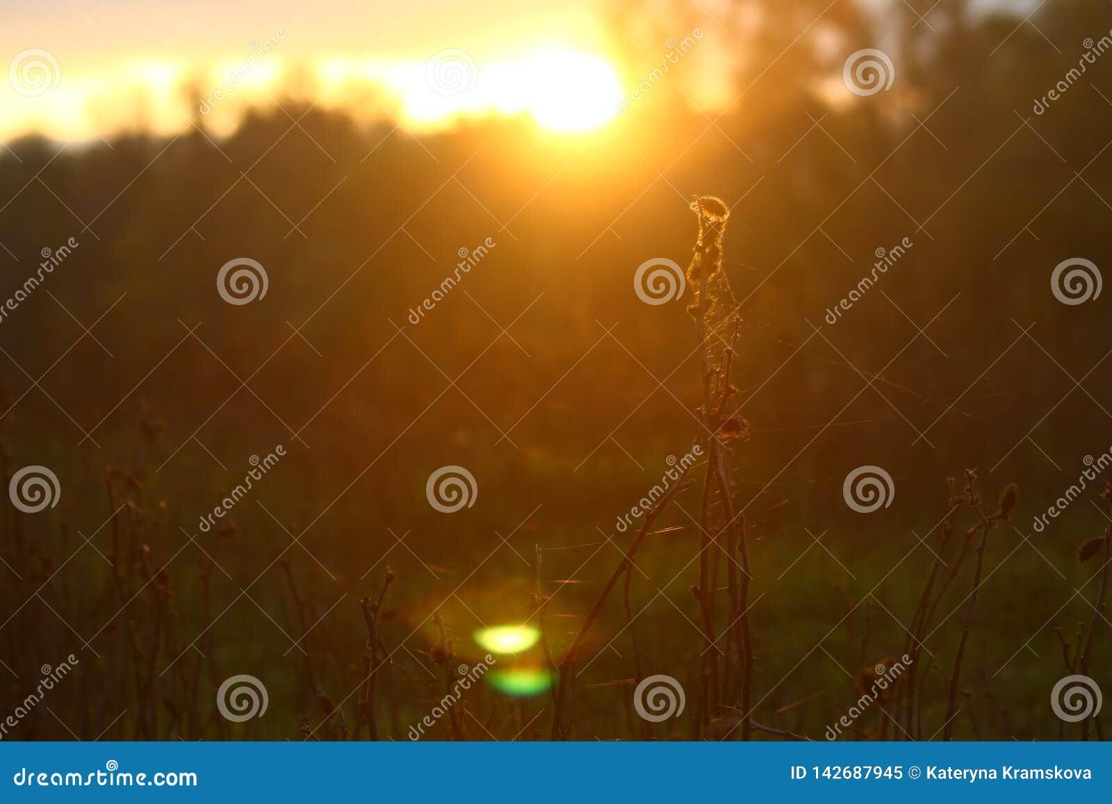 Sonniges Herbstfeld