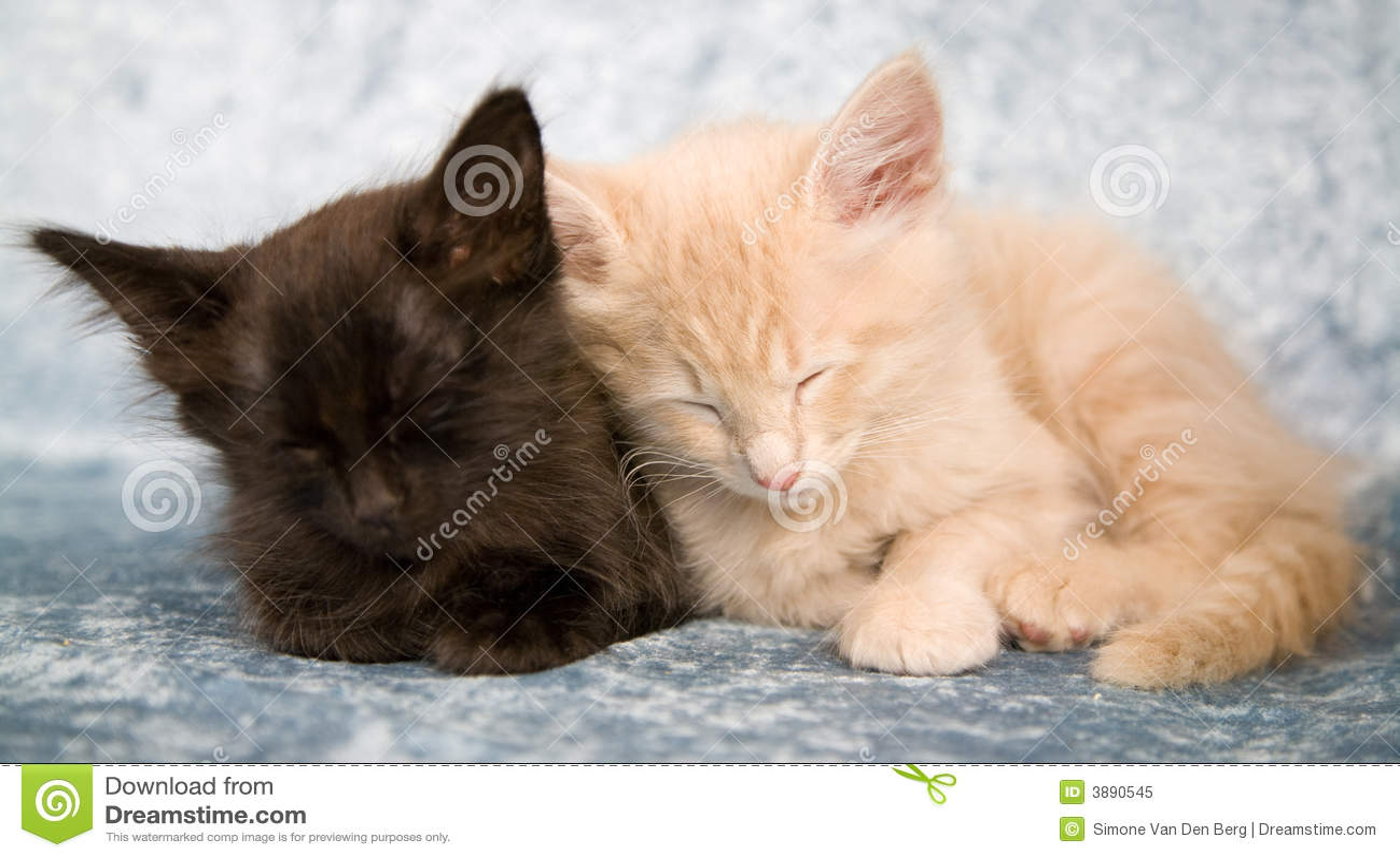 Sonno insieme