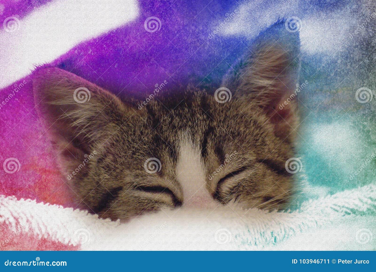Sonno sveglio del gattino del bambino