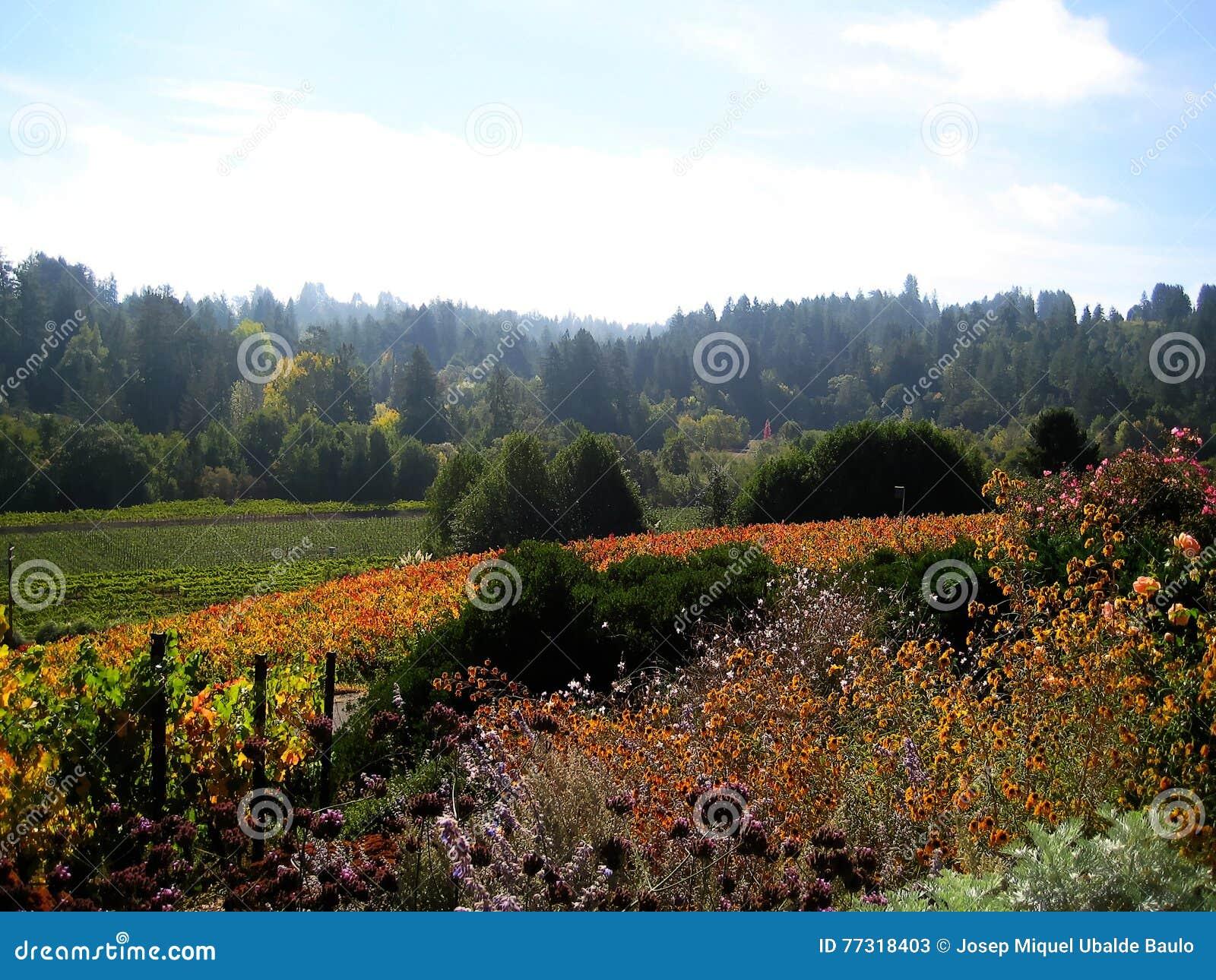 Sonoma-de wijngaarden & x28 van de Provincie; California& x29;