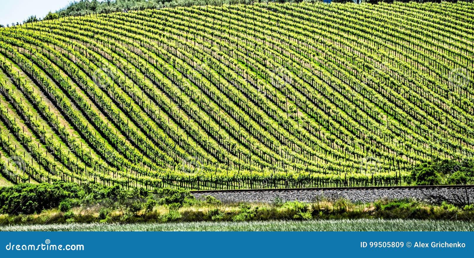 Sonoma en vinyards van de napavallei in Californië