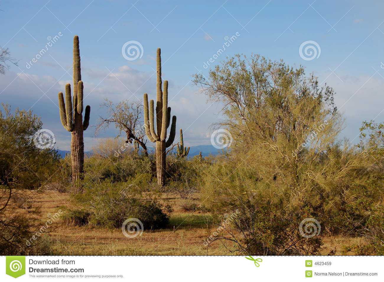 Sonoran Desert Royalty Free Stock Images - Image: 4623459