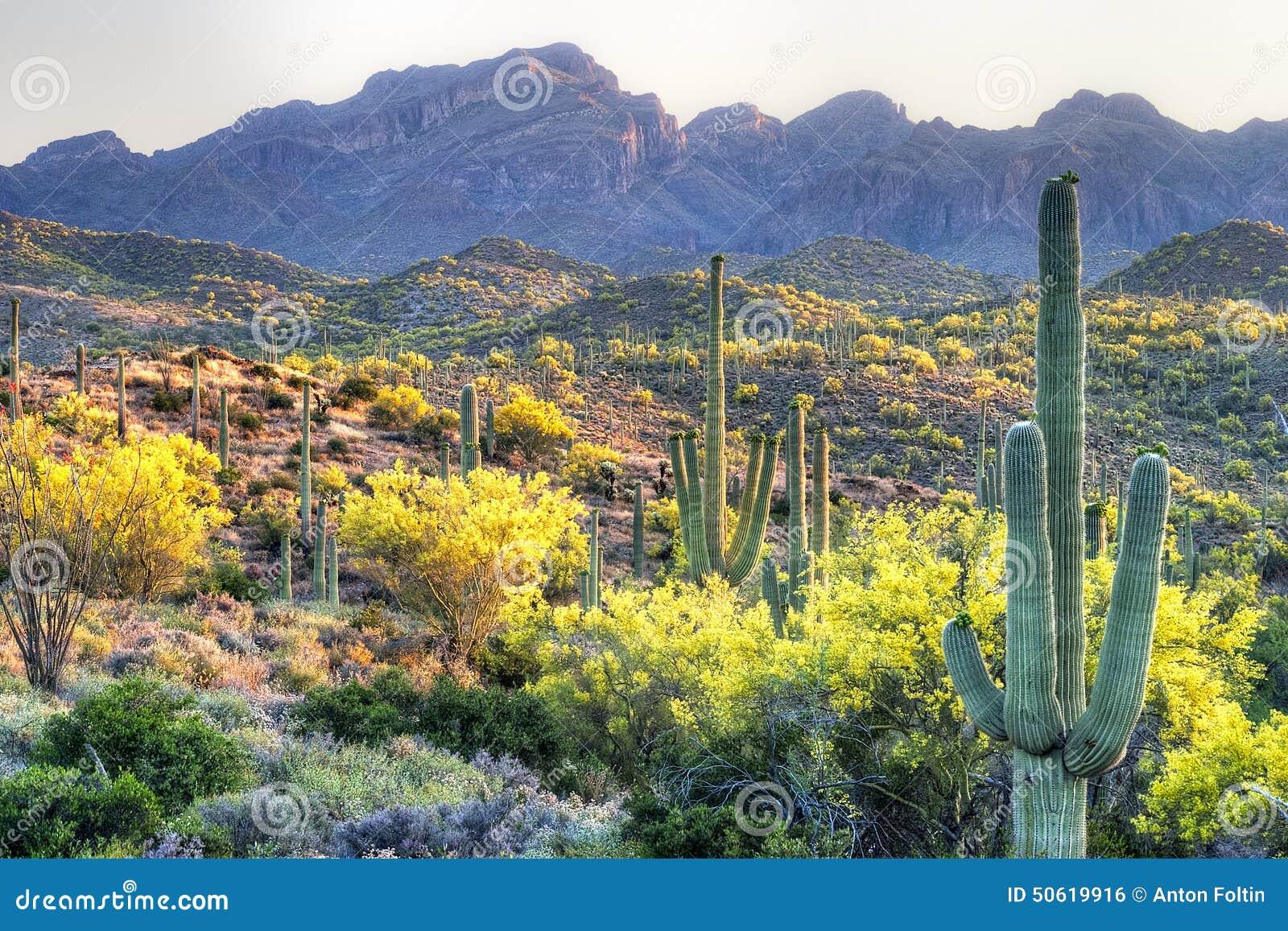Sonoran Wüste