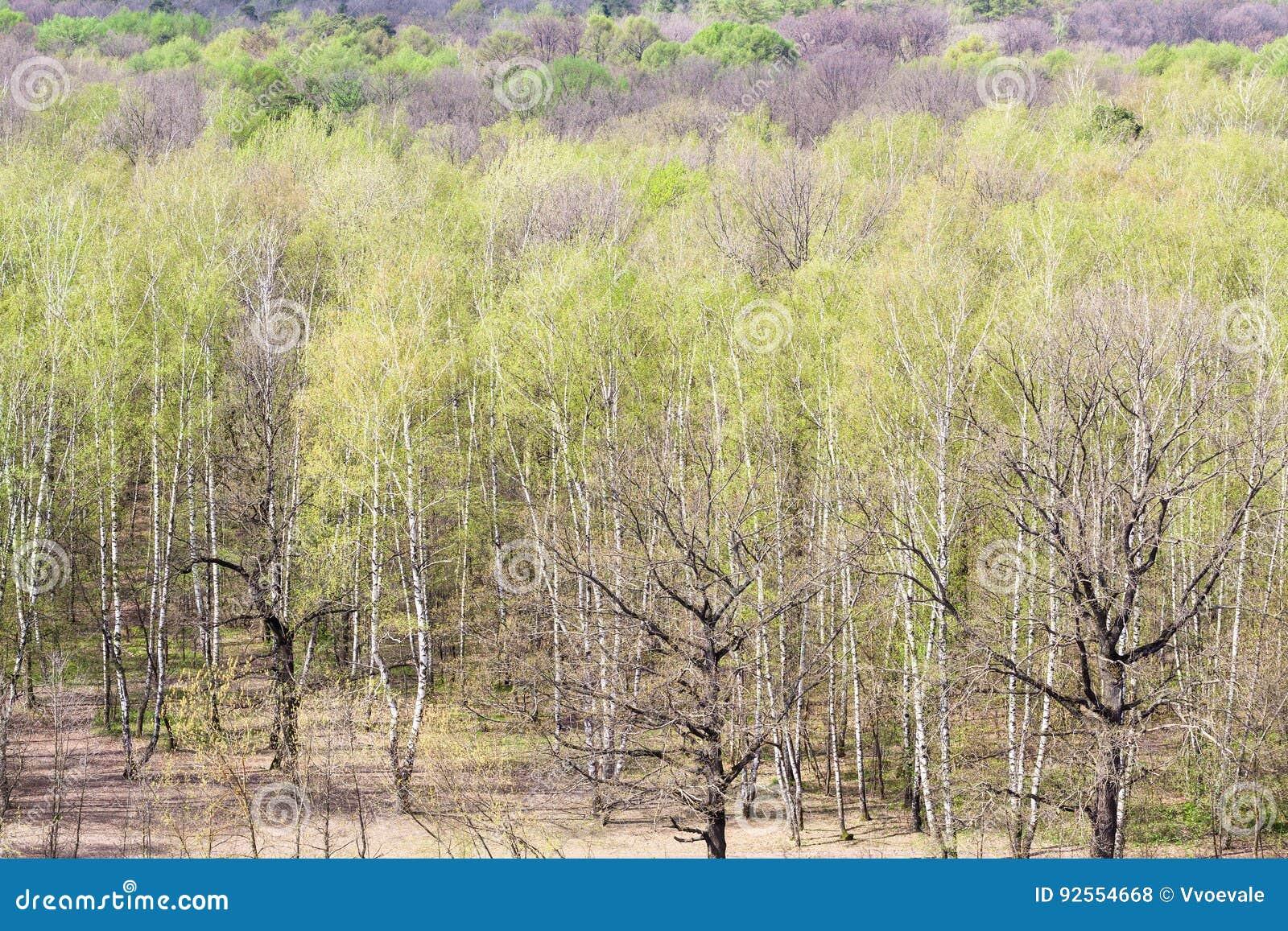Sopra la vista del legno con fogliame verde in primavera