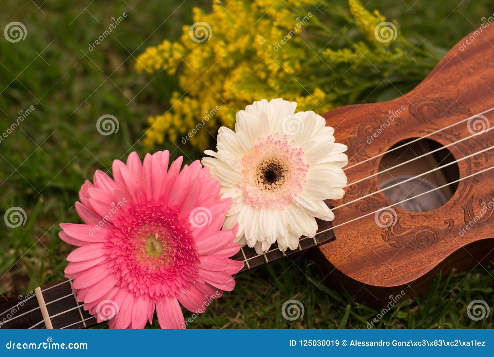 Soprano da uquelele decorado com flores do gerbera