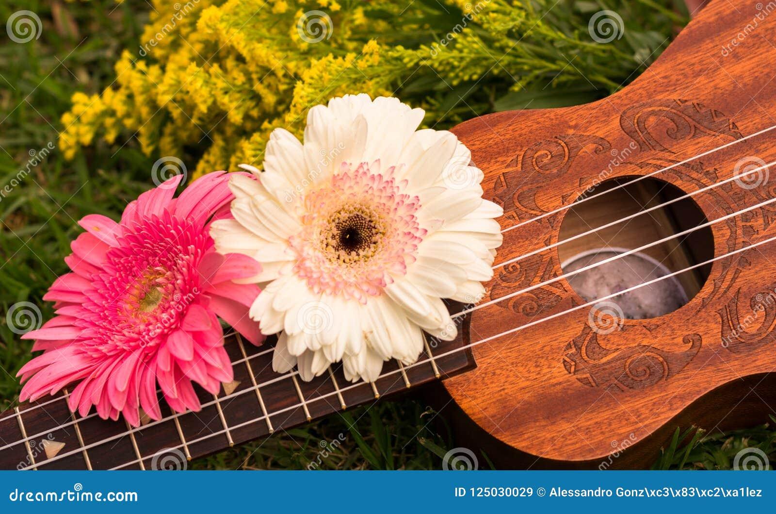 Soprano del ukelele adornado con las flores del gerbera