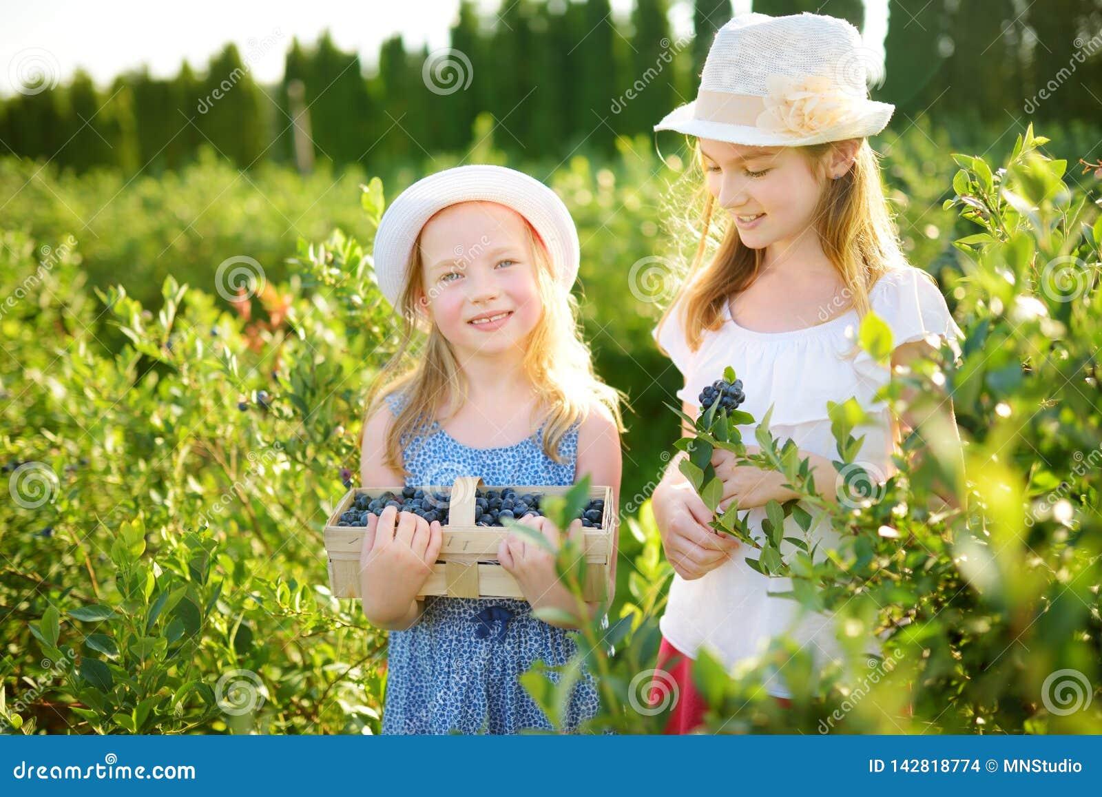 Sorelline sveglie che selezionano le bacche fresche sull azienda agricola organica del mirtillo il giorno di estate caldo e soleg