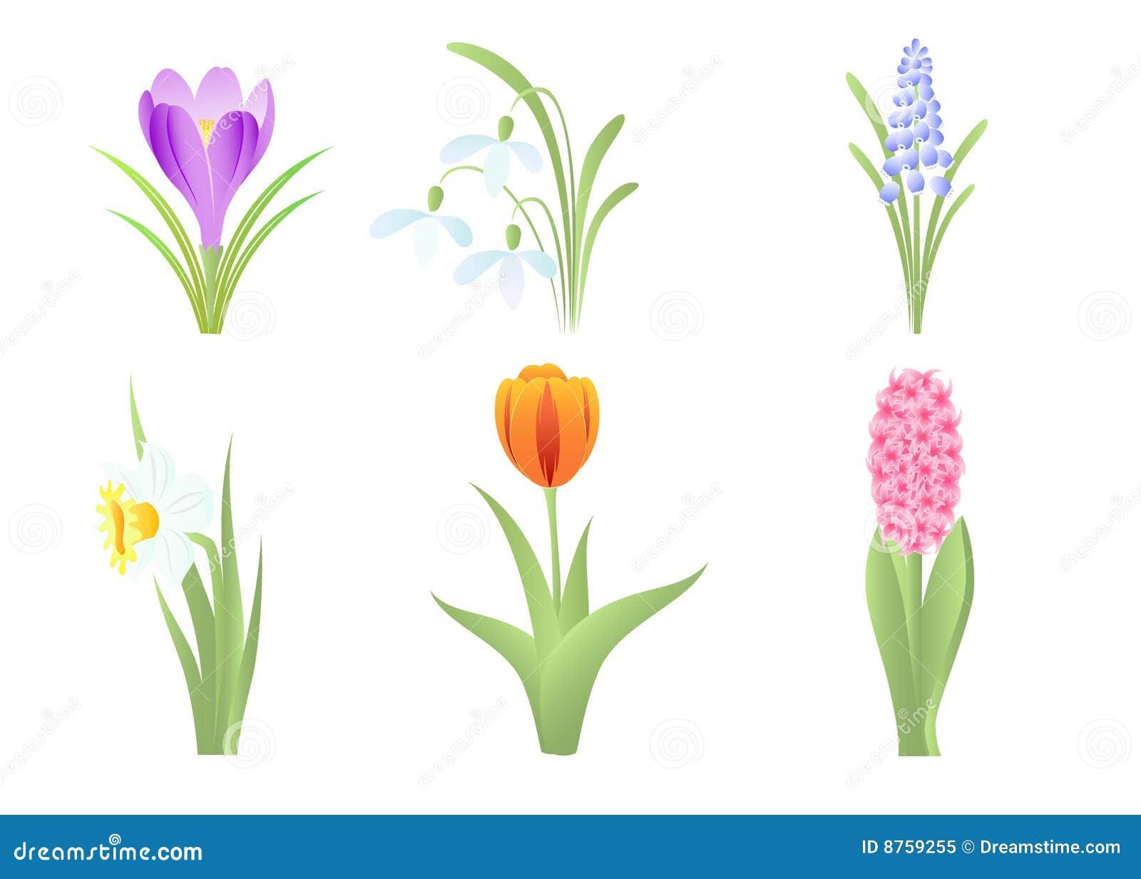 Sorgente dei fiori