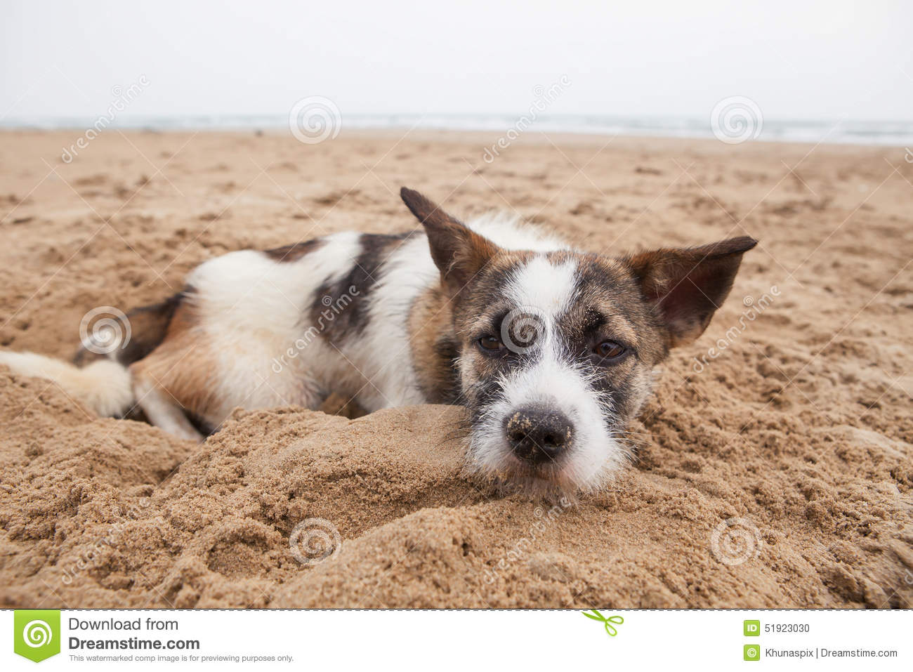 Sorrow face of homeless dog lying on sand beach with lonely feel