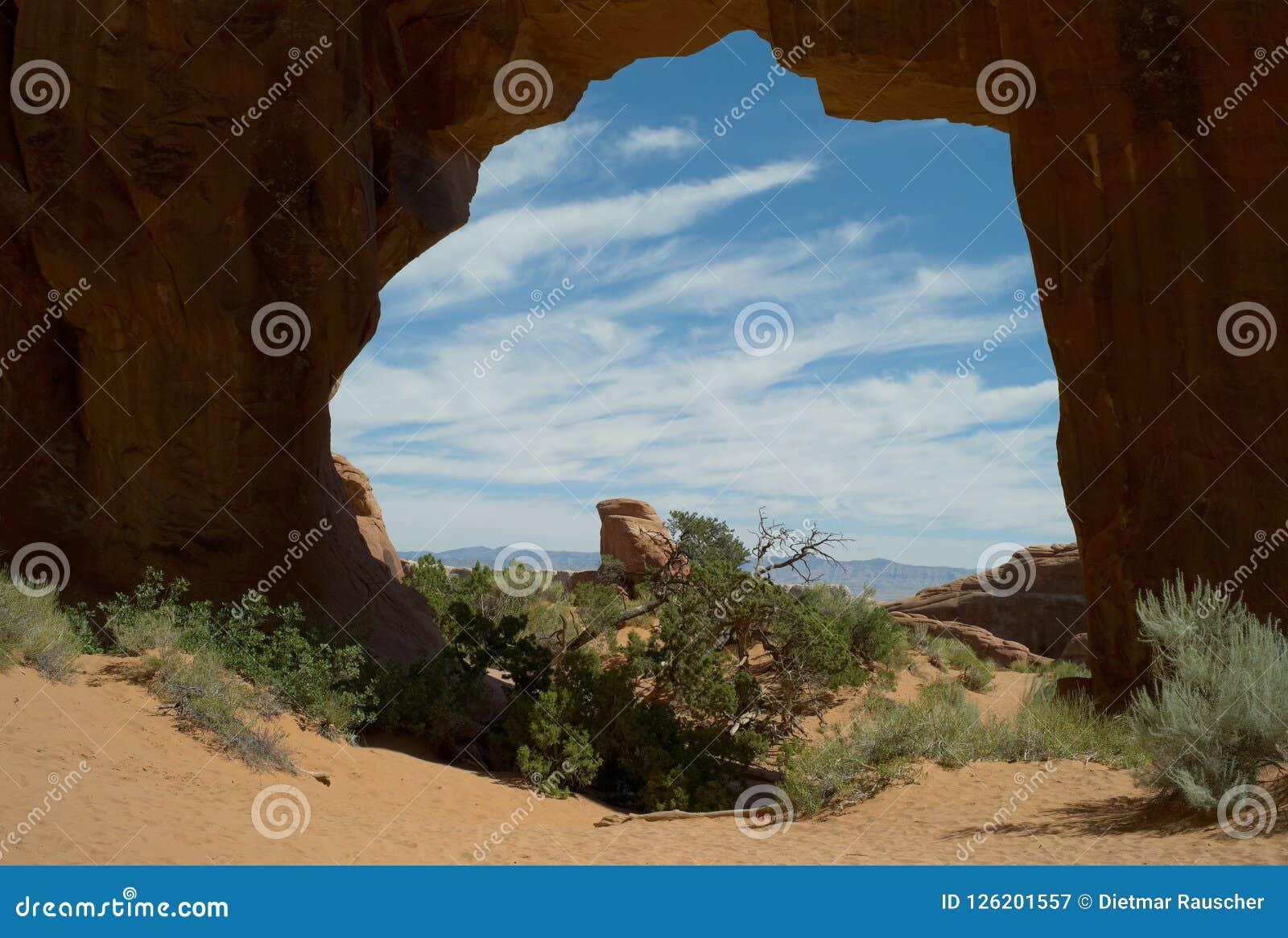 Sosna łuk, łuki parki narodowi, Utah, usa