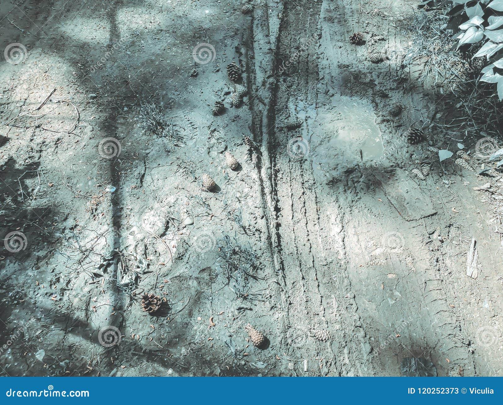 Sosna rożki spadali ziemia od sosny Zamyka w górę strzału