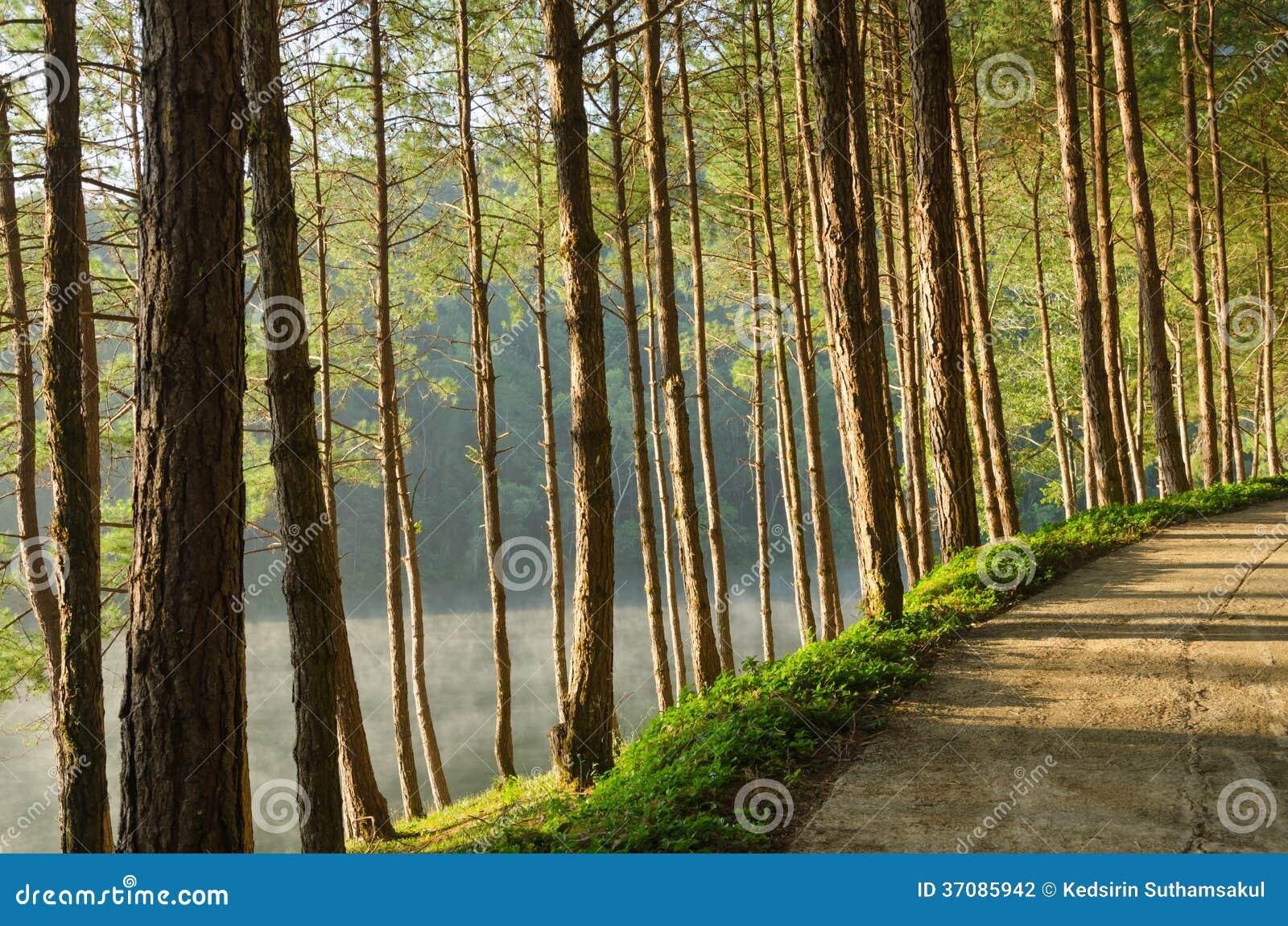 Download Sosnowi Lasy I Jeziora W Tajlandia Zdjęcie Stock - Obraz złożonej z hong, błękitny: 37085942