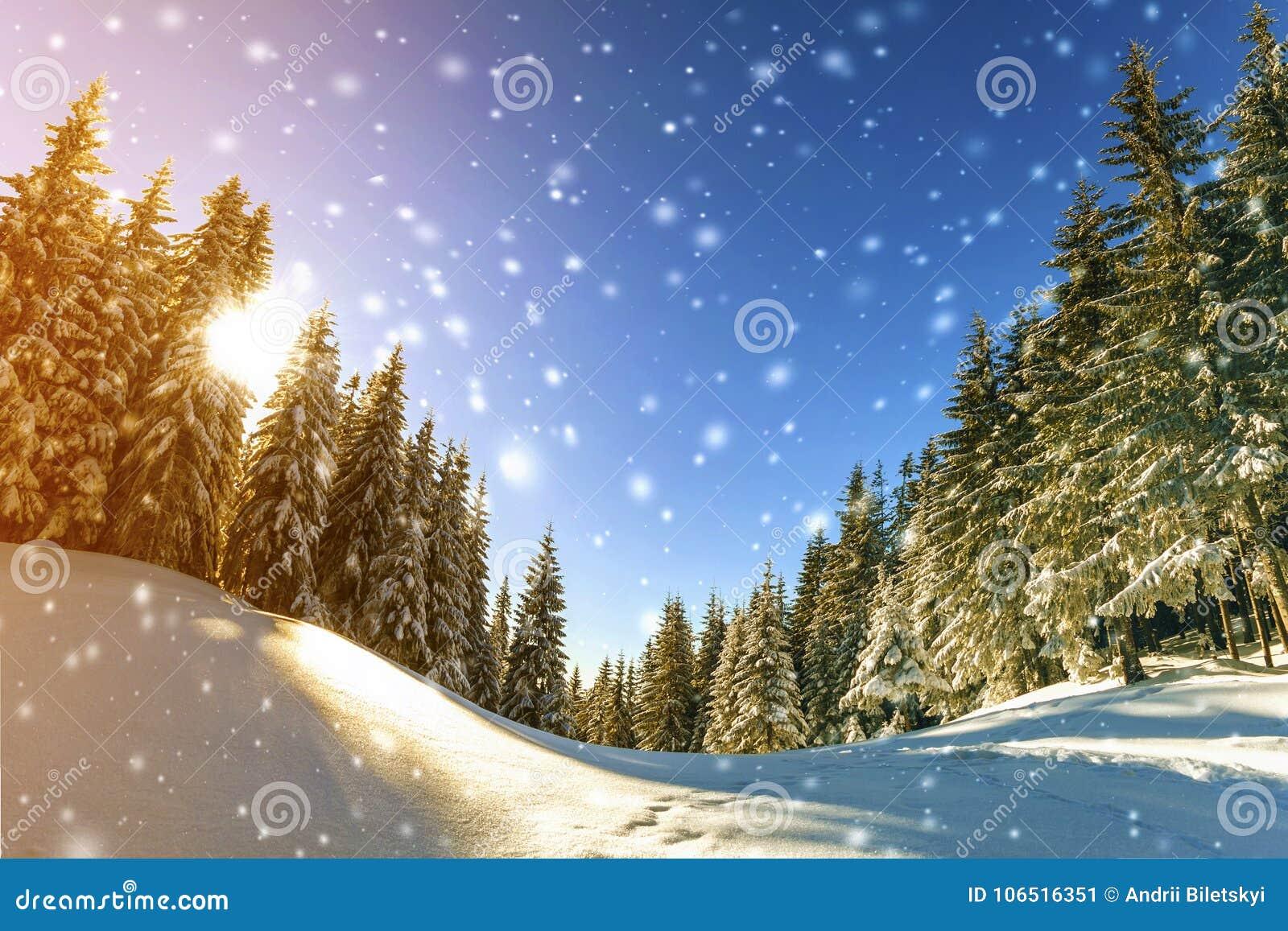 Sosny w górach i spada śnieg w bajki zimie su