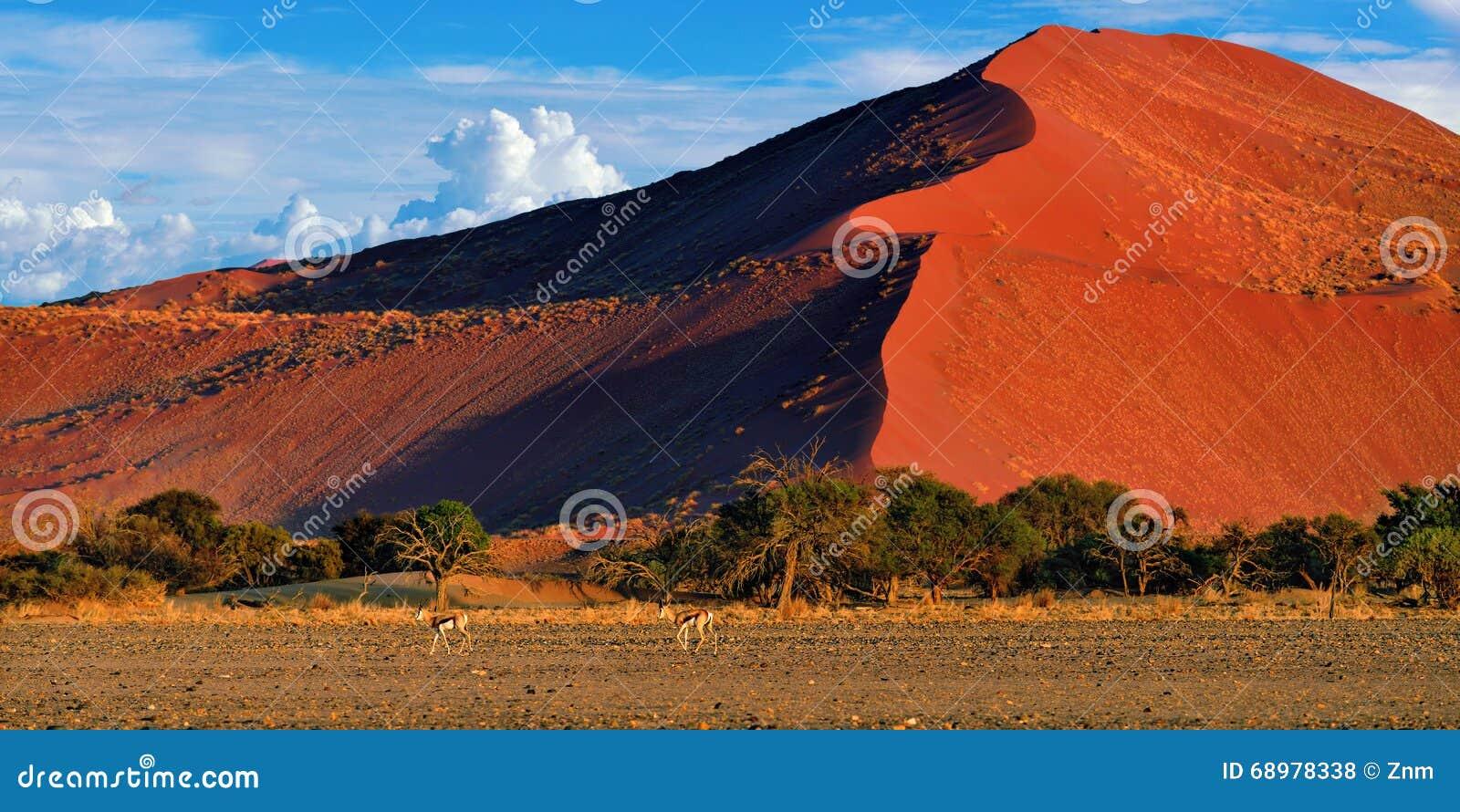 Sossusvlei, parque nacional de Namib Naukluft, Namibia