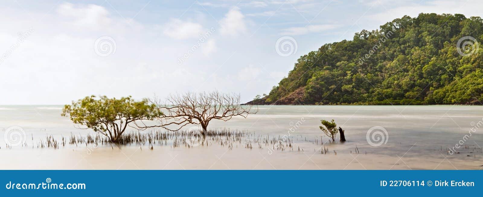 Sosta nazionale Australia dell albero della mangrovia