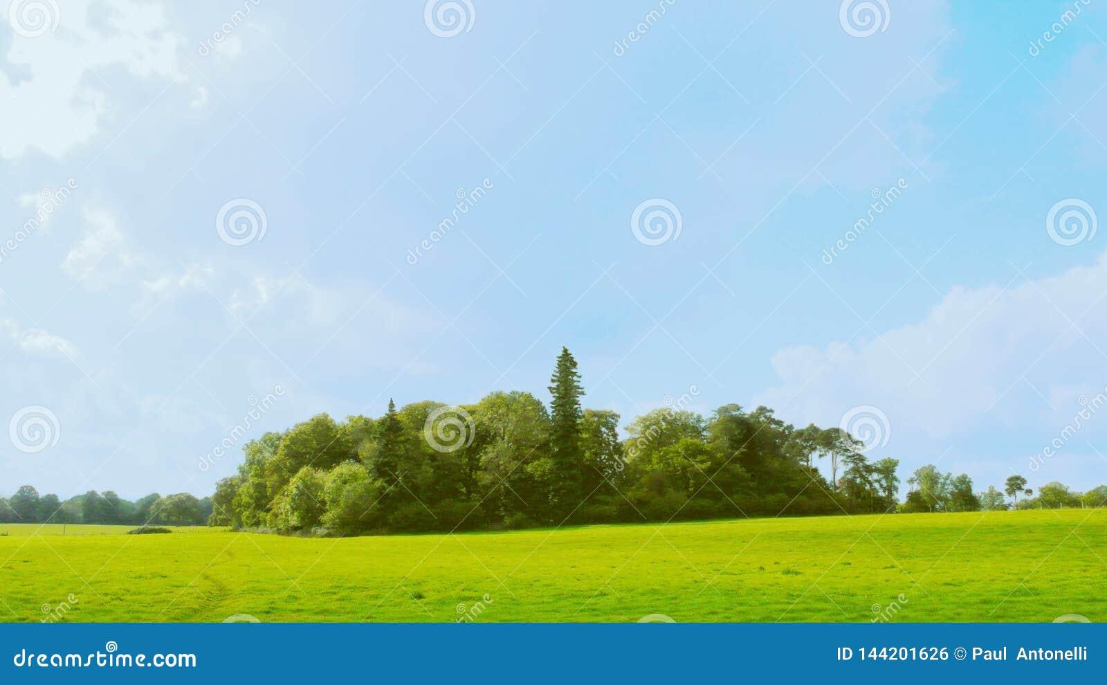 Soto de la versión 1 de los árboles