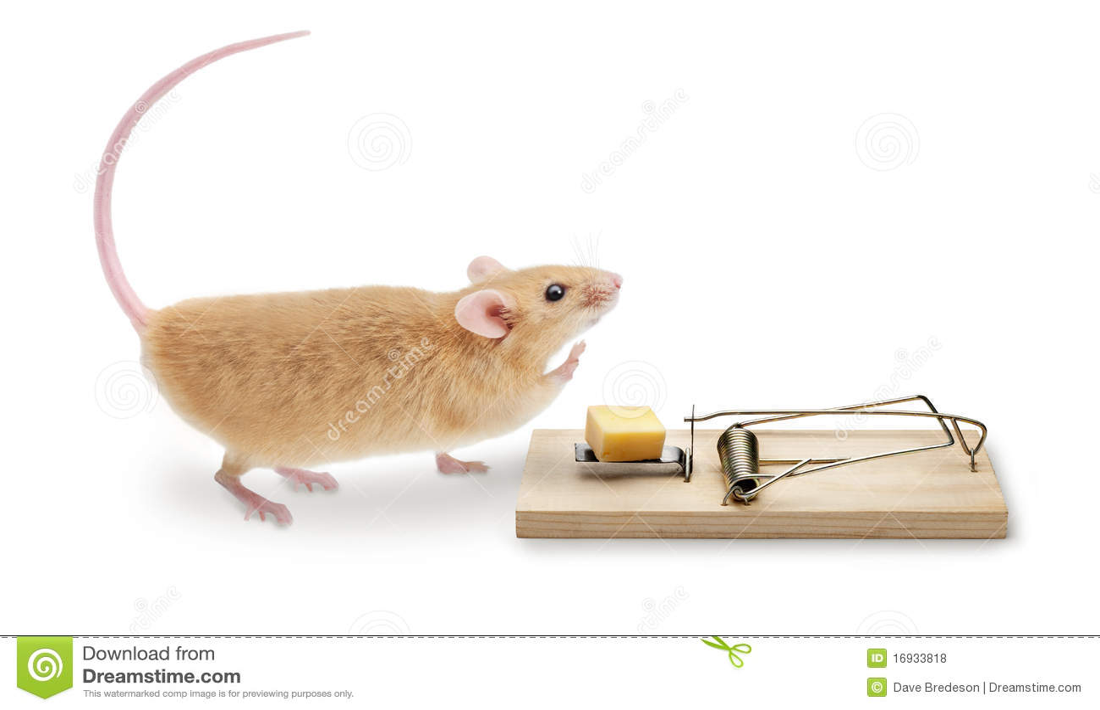 Souricière de trappe de souris