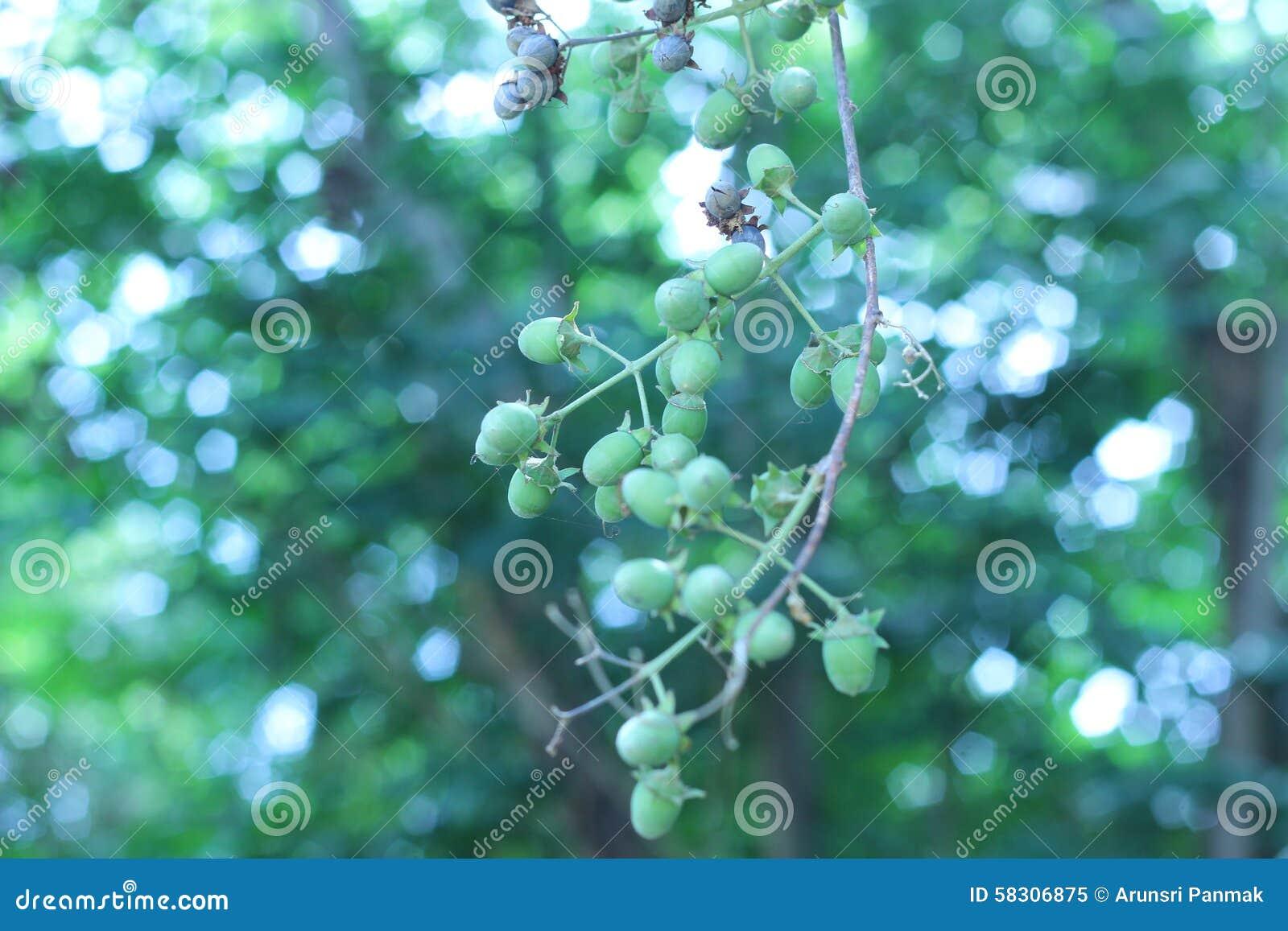 Sous les grandes branches d arbre soyez fort et beau